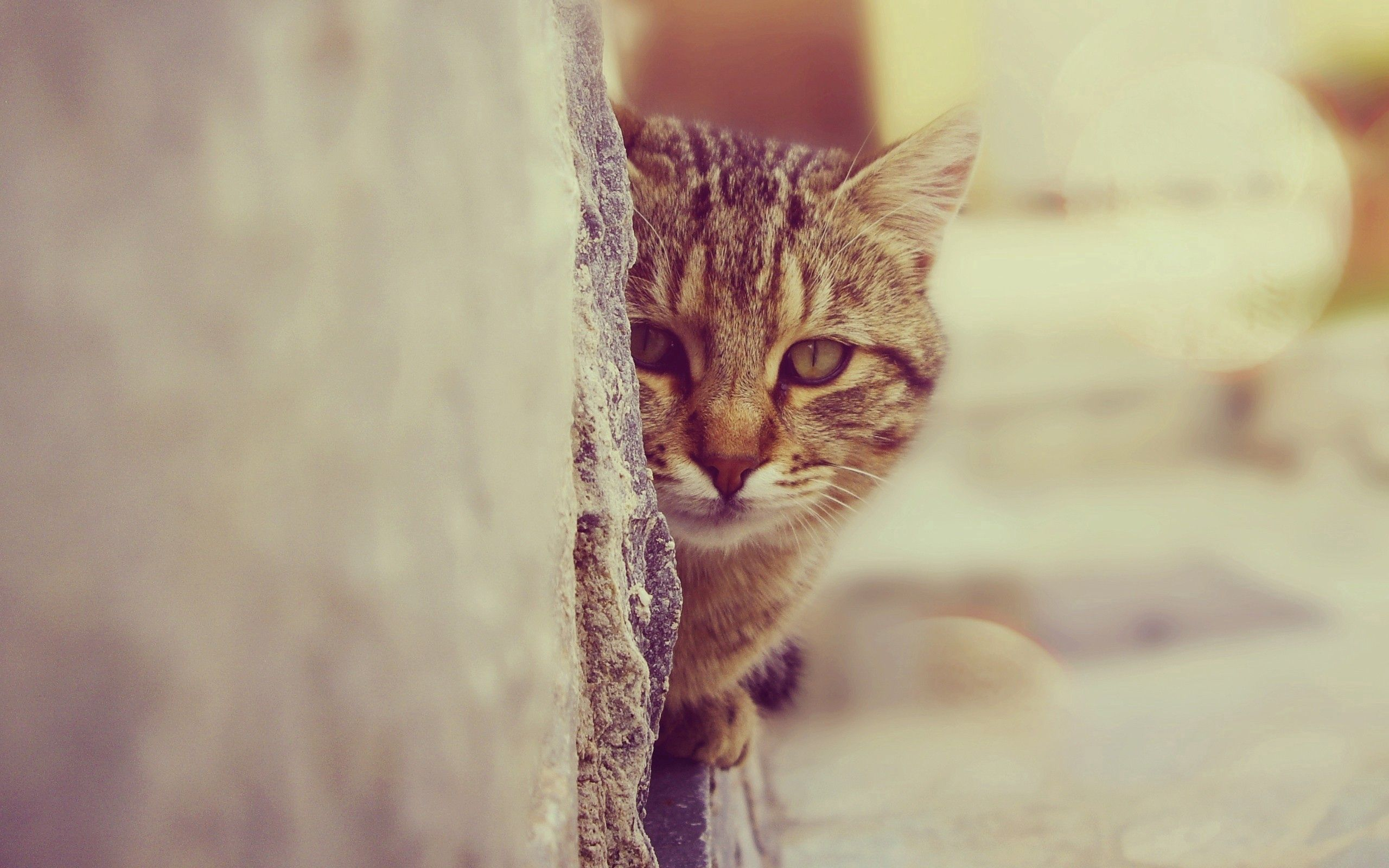 127576 download wallpaper Animals, Cat, Muzzle, Peek Out, Look Out screensavers and pictures for free