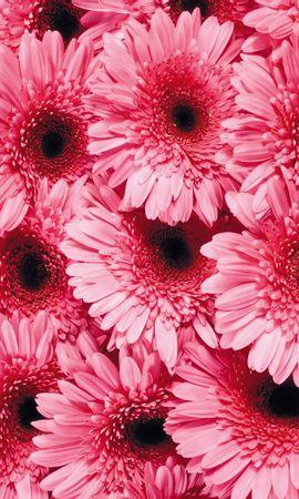 3338 скачать обои Растения, Цветы, Фон - заставки и картинки бесплатно