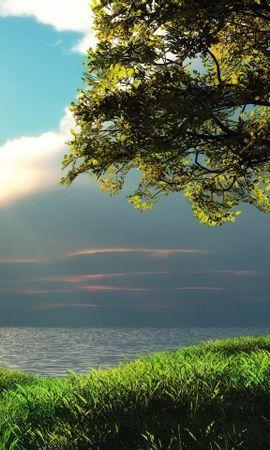 31317 скачать обои Пейзаж, Деревья, Море - заставки и картинки бесплатно