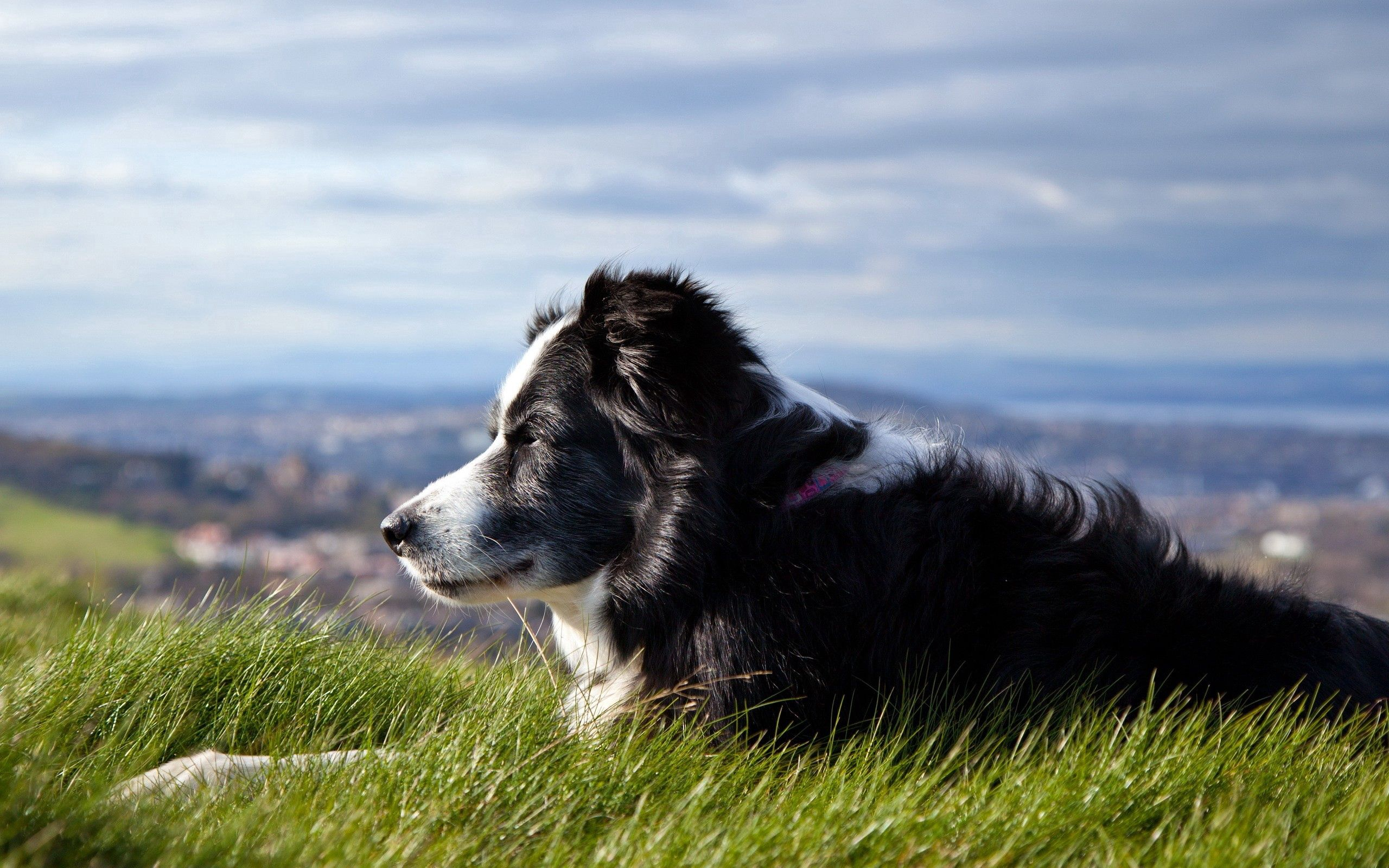 148908 download wallpaper Animals, Dog, Grass, To Lie Down, Lie, Expectation, Waiting screensavers and pictures for free