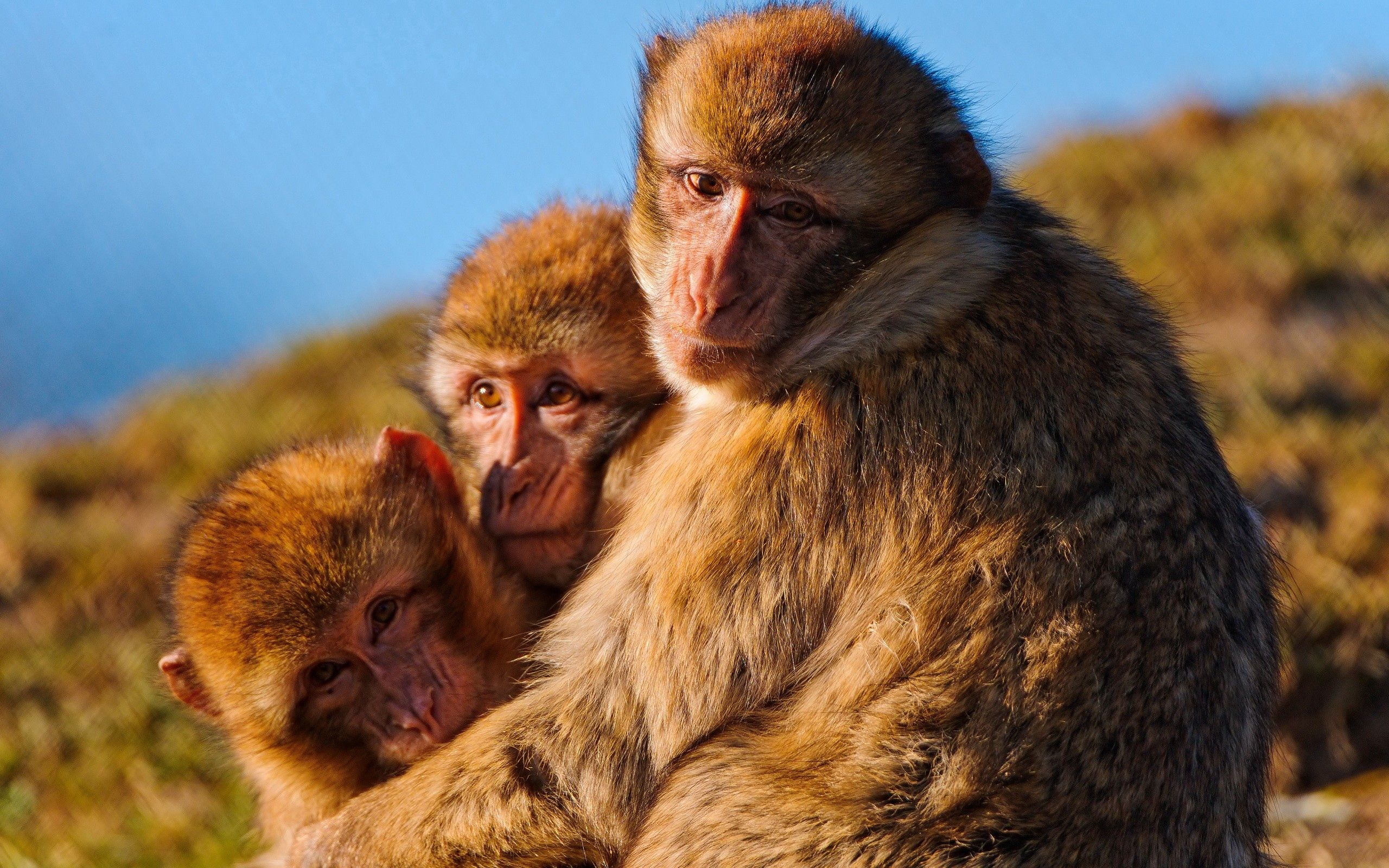 57248 Screensavers and Wallpapers Monkeys for phone. Download Animals, Monkeys, Family, Embrace, Self-Preservation, Instincts pictures for free