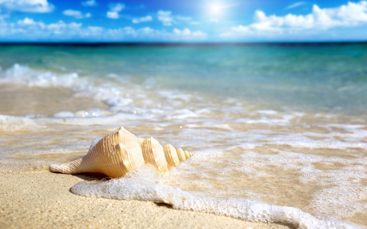 20874 скачать обои Пейзаж, Море, Пляж, Ракушки - заставки и картинки бесплатно