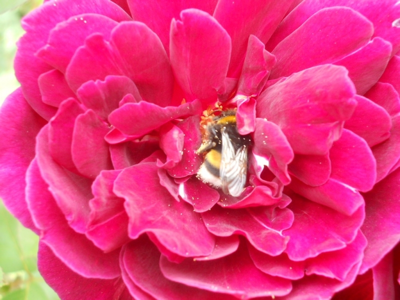 28895 Screensavers and Wallpapers Bees for phone. Download Insects, Bees pictures for free