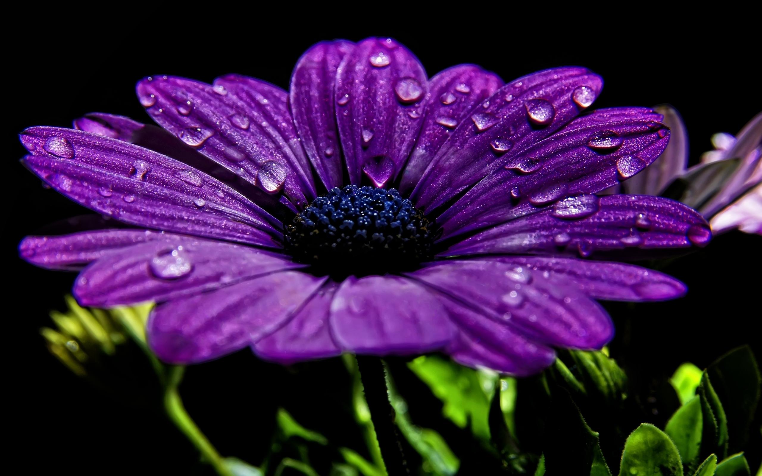 42797 Hintergrundbild herunterladen Pflanzen, Blumen - Bildschirmschoner und Bilder kostenlos