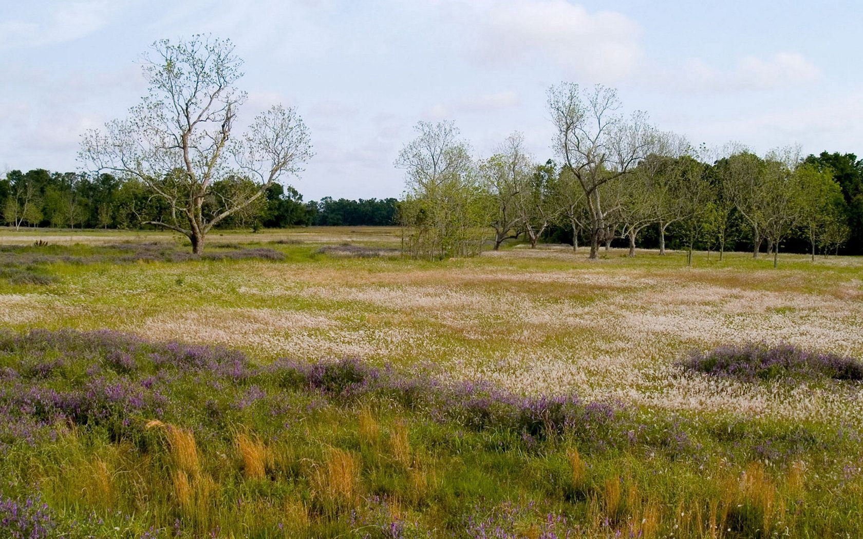 113031 download wallpaper Nature, Field, Trees, Meadow, Flowers screensavers and pictures for free