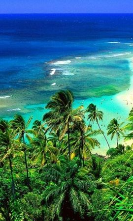 31327 скачать обои Пейзаж, Море, Пляж, Пальмы - заставки и картинки бесплатно