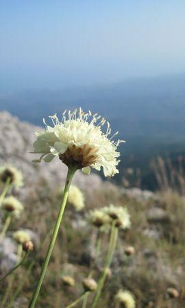 22384 скачать обои Растения, Цветы, Горы - заставки и картинки бесплатно