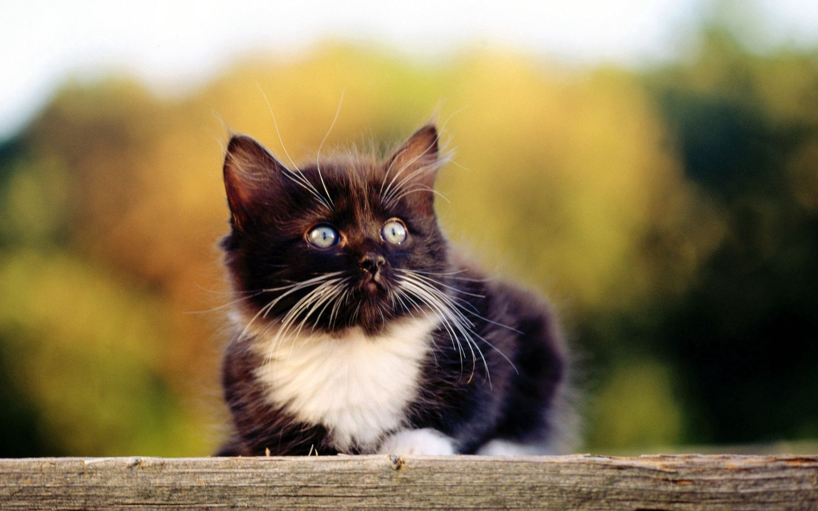 77493 download wallpaper Animals, Kitty, Kitten, To Lie Down, Lie, Muzzle, Spotted, Spotty, Nice, Sweetheart screensavers and pictures for free