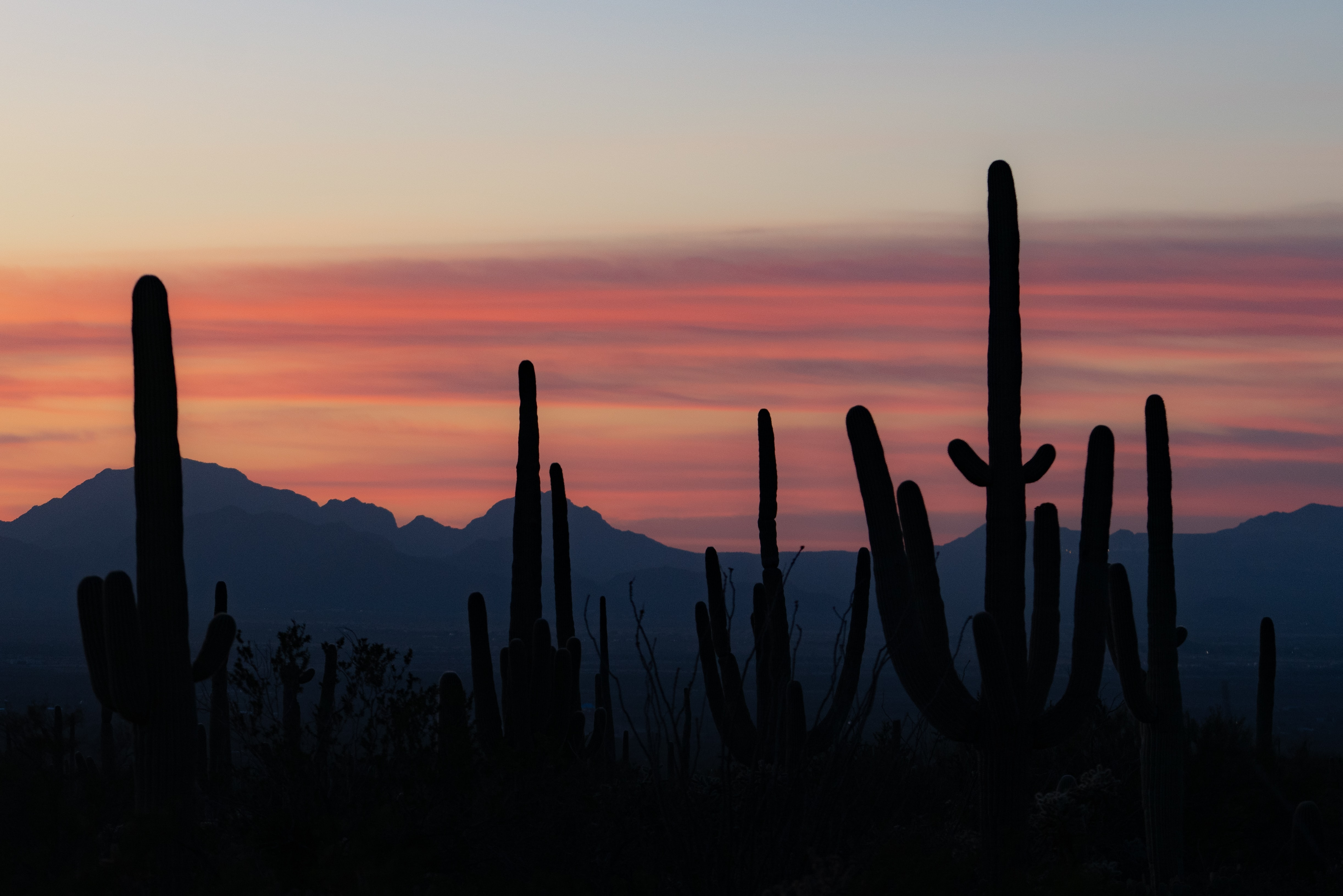 89514 download wallpaper Cactuses, Mountains, Twilight, Dark, Silhouettes, Dusk screensavers and pictures for free