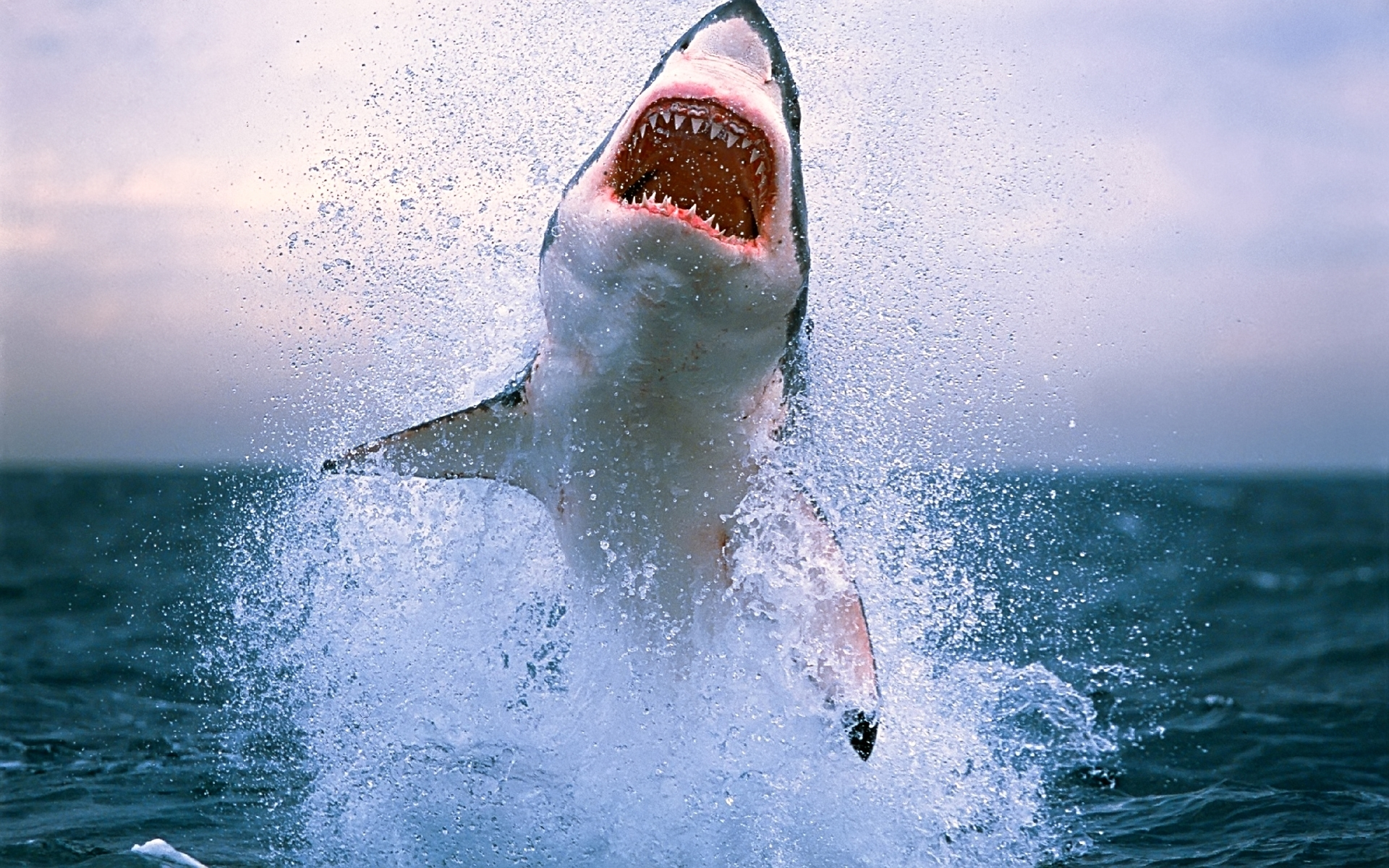 31743 download wallpaper Animals, Sharks screensavers and pictures for free