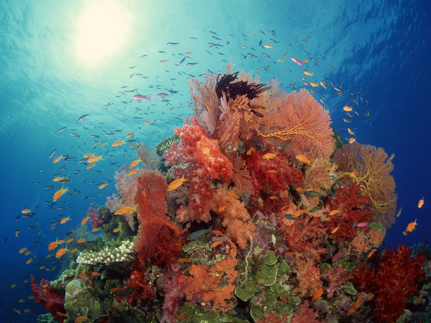 43505 download wallpaper Landscape, Sea, Fishes screensavers and pictures for free