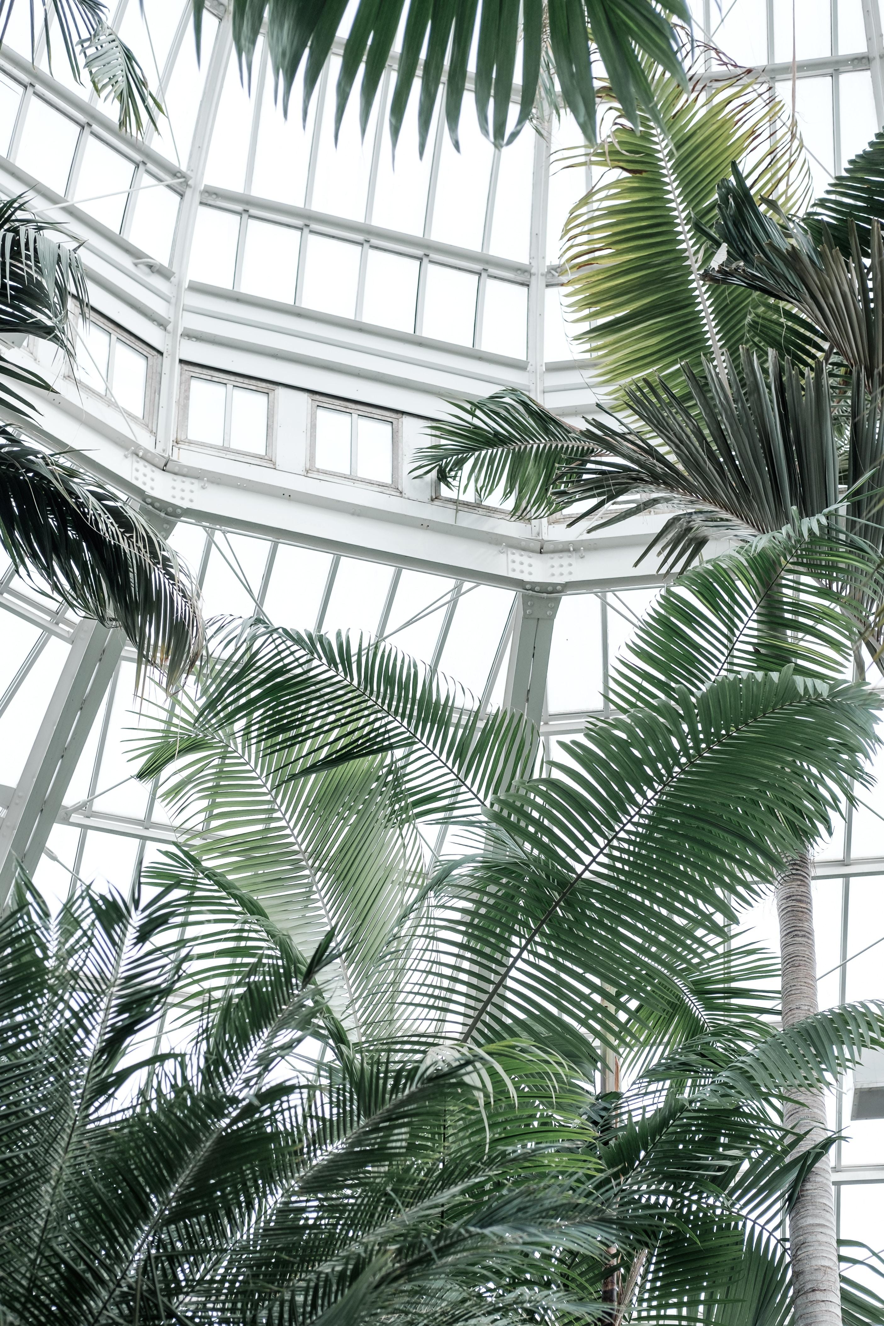 120414 скачать обои Разное, Оранжерея, Растения, Тропический, Пальмы - заставки и картинки бесплатно