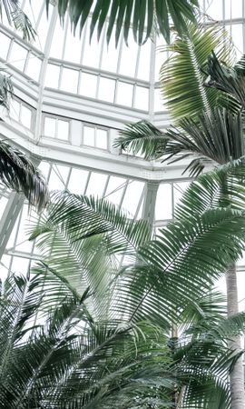 120414 download wallpaper Miscellanea, Miscellaneous, Greenhouse, Plants, Tropical, Palms screensavers and pictures for free