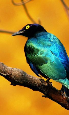 8686 download wallpaper Animals, Birds screensavers and pictures for free