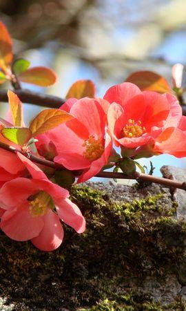 4660 скачать обои Растения, Цветы - заставки и картинки бесплатно