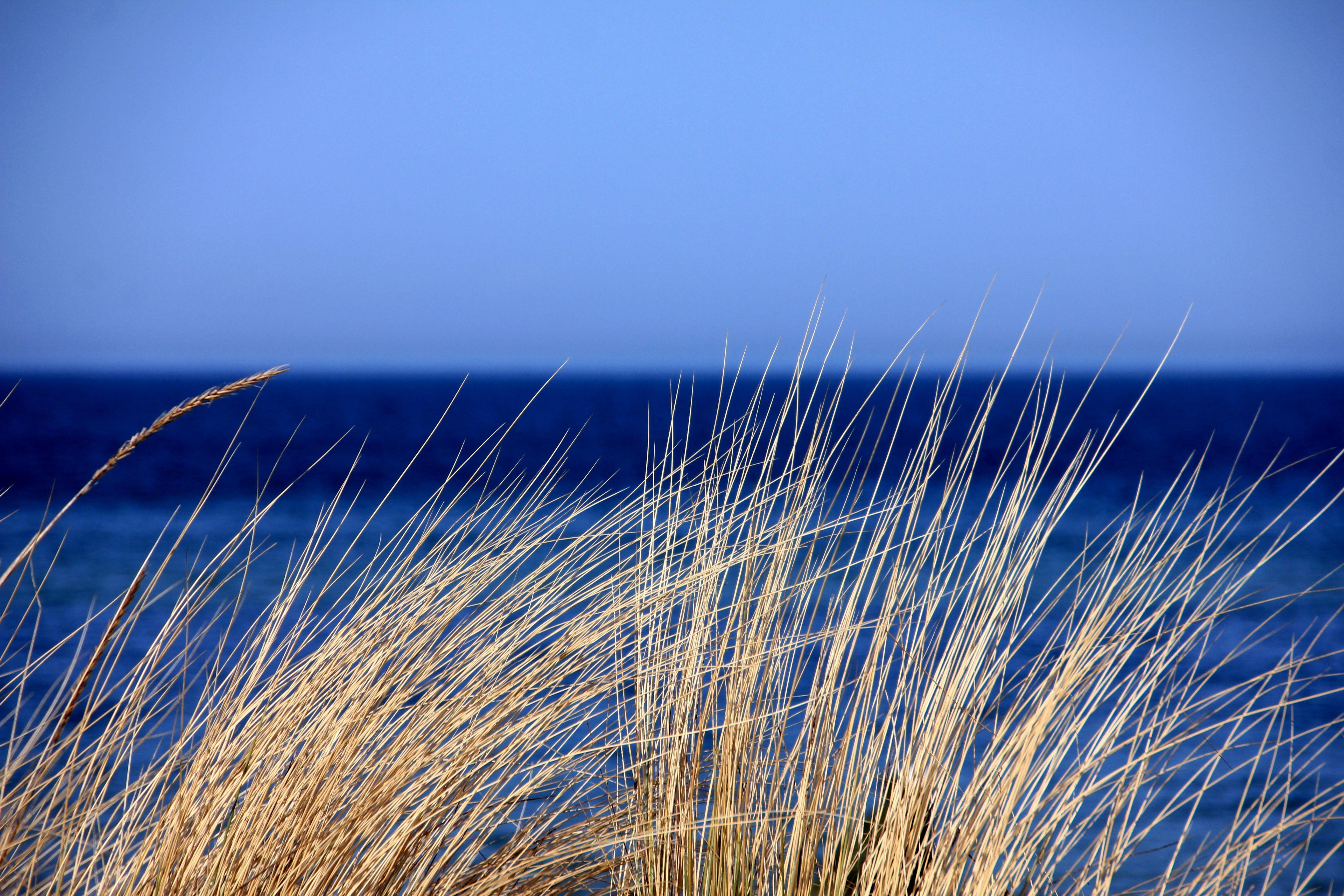 124698 скачать обои Природа, Трава, Море, Ветер, Небо - заставки и картинки бесплатно