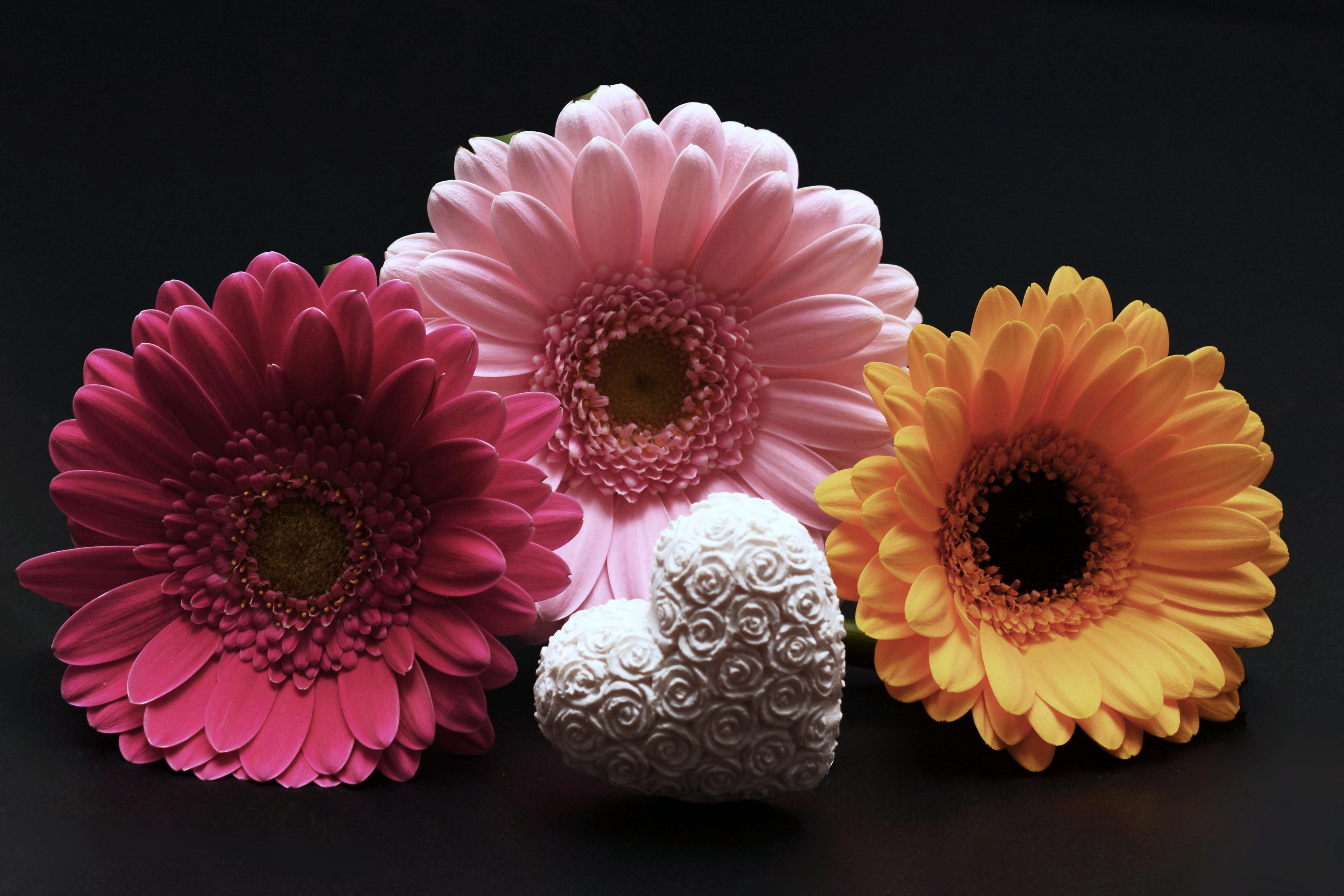 102053 Hintergrundbild herunterladen Feiertage, Herzen, Blumen, Valentinstag, Gerbera, Ein Herz - Bildschirmschoner und Bilder kostenlos