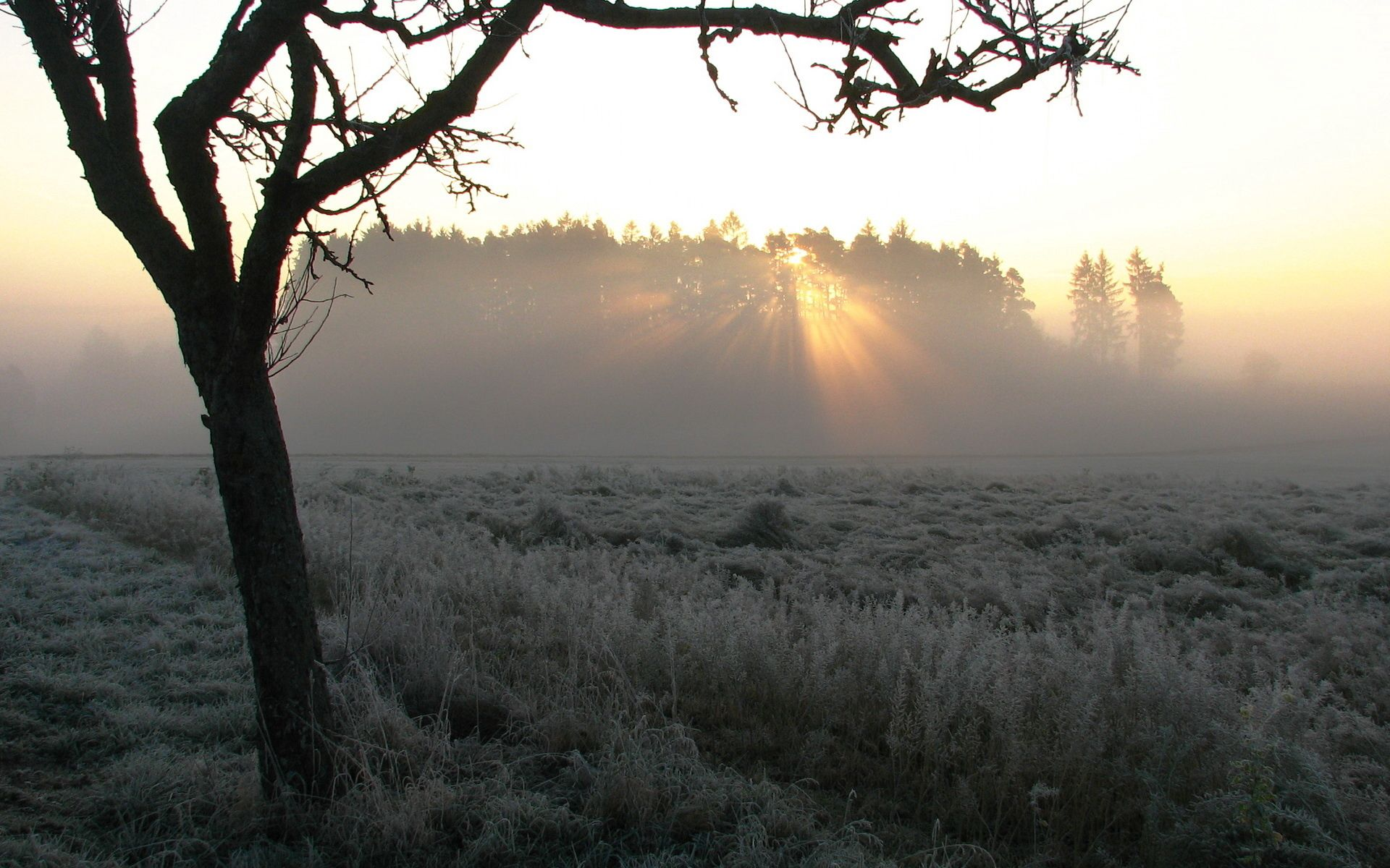 157880 Screensavers and Wallpapers Beams for phone. Download Nature, Wood, Beams, Rays, Tree, Fog, Morning, Frost pictures for free