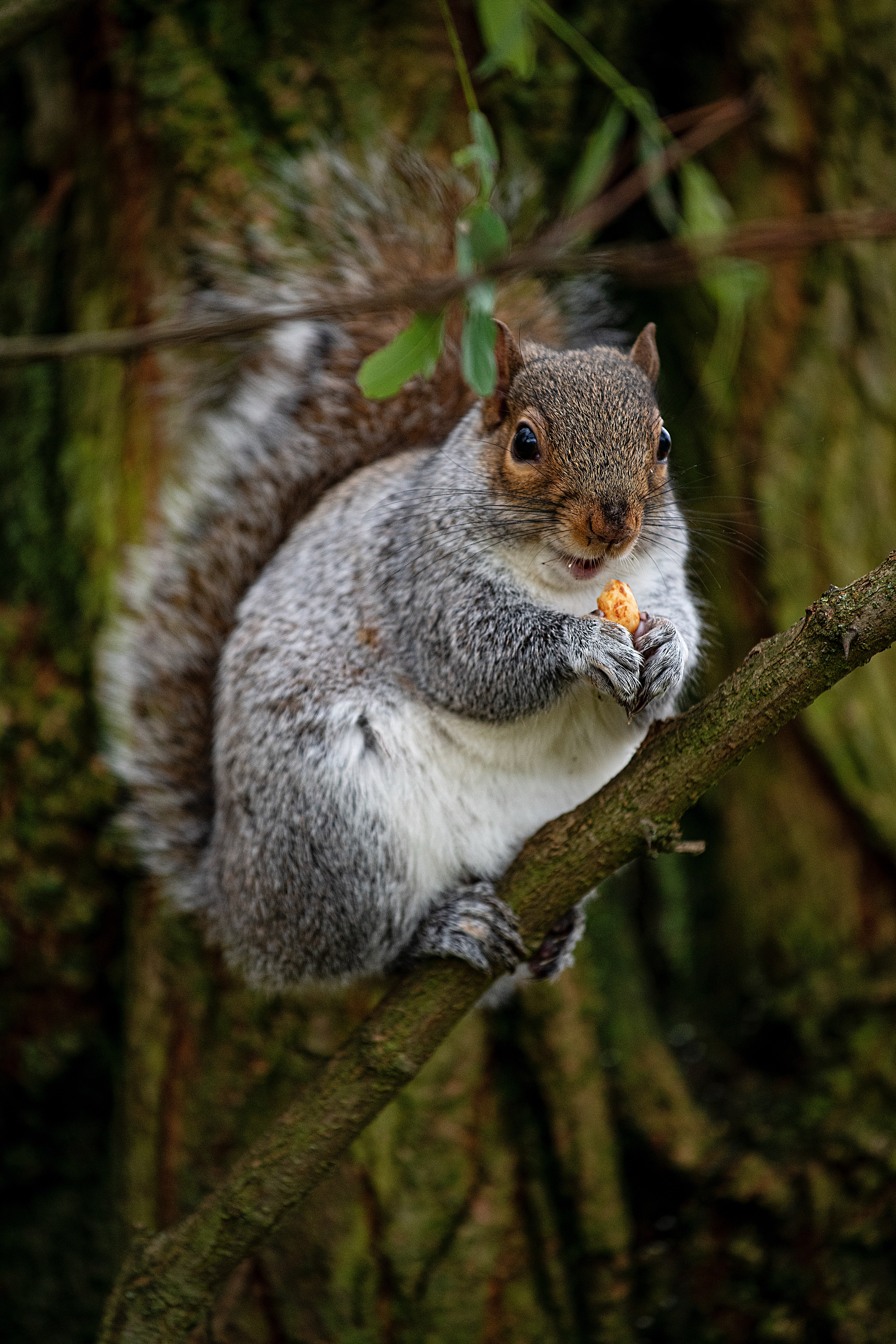 98571 download wallpaper Animals, Squirrel, Rodent, Nice, Sweetheart, Nut, Wood, Tree screensavers and pictures for free