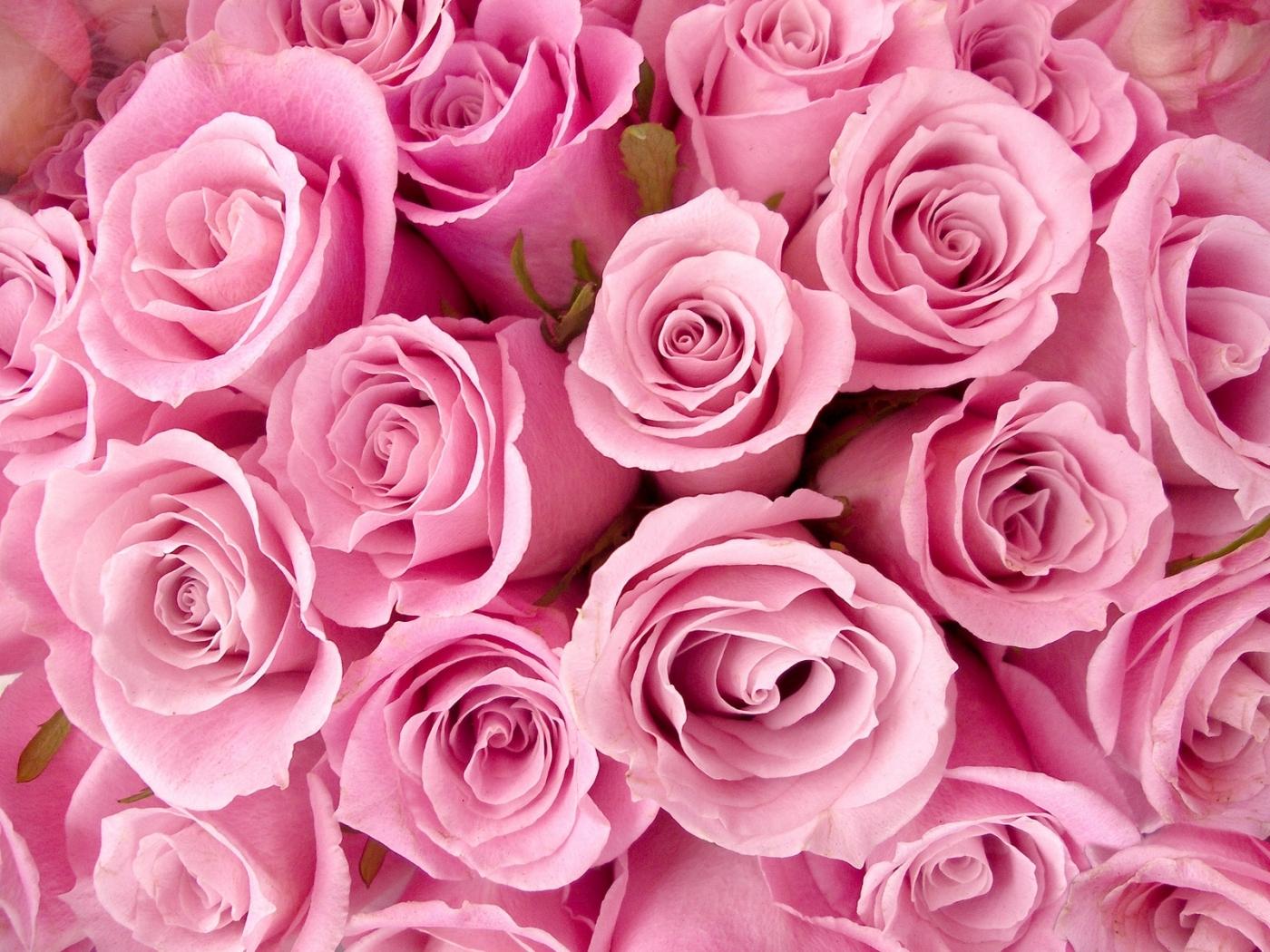 30621 скачать Красные обои на телефон бесплатно, Розы, Растения, Цветы Красные картинки и заставки на мобильный