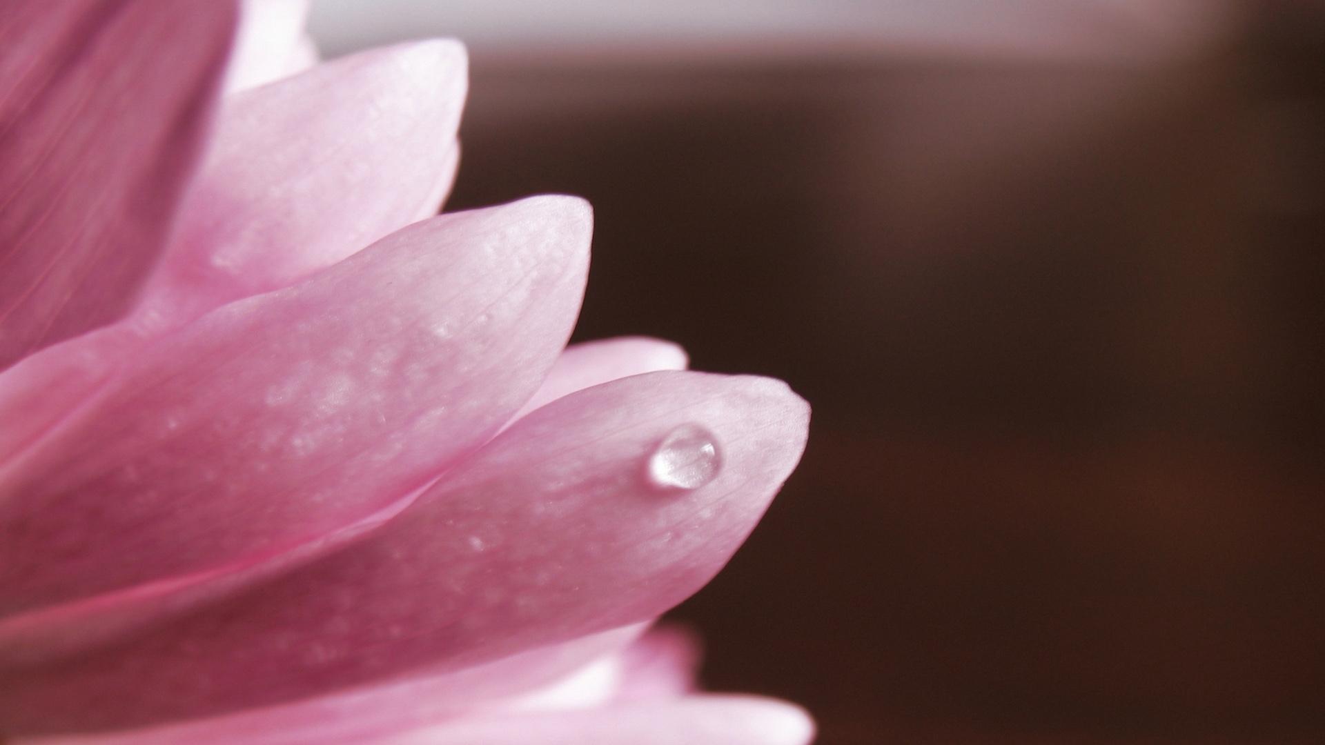 4198 скачать обои Растения, Цветы, Капли - заставки и картинки бесплатно