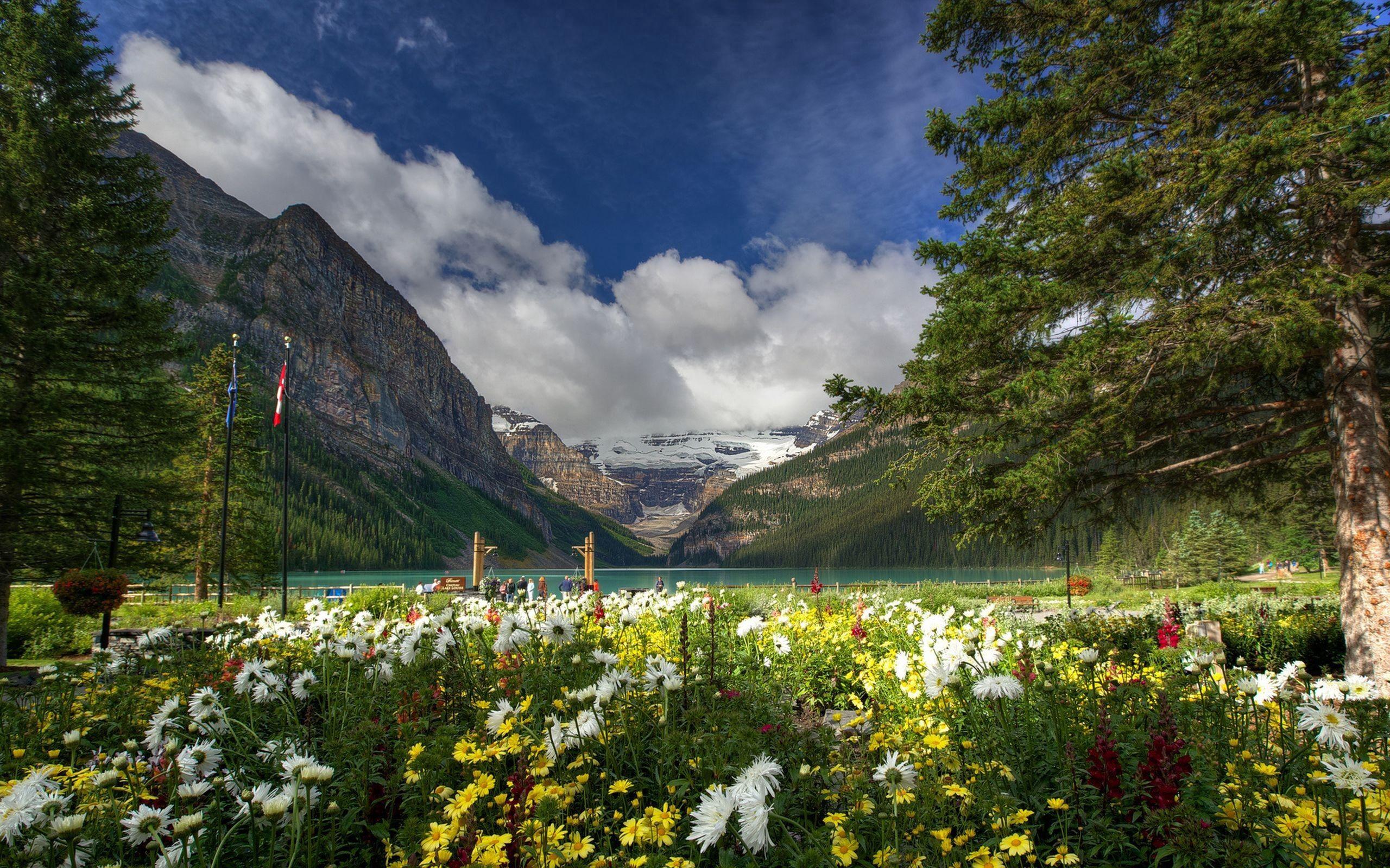155956 скачать обои Природа, Трава, Поле, Деревья, Горы, Цветы - заставки и картинки бесплатно