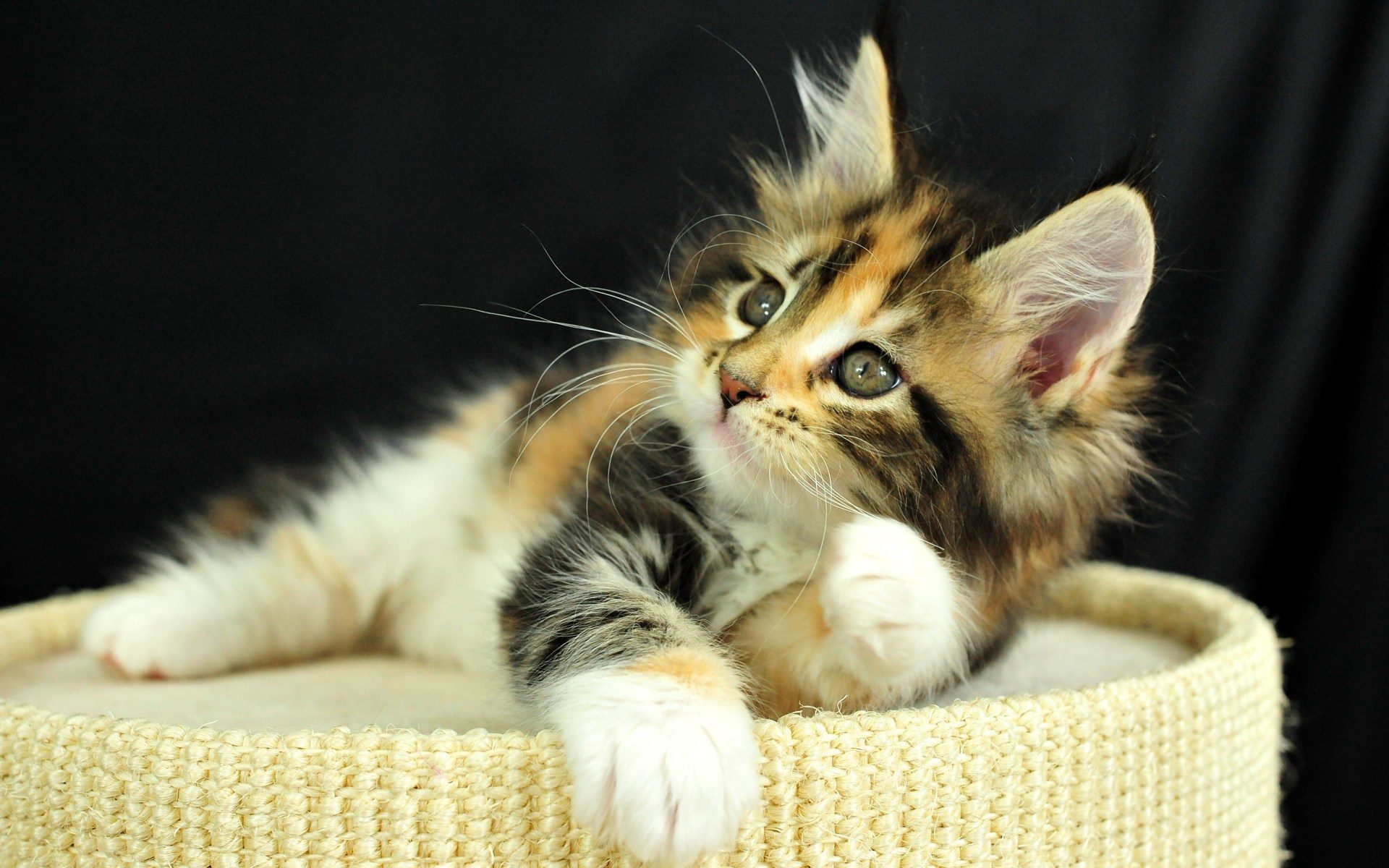 47157 download wallpaper Cats, Animals screensavers and pictures for free
