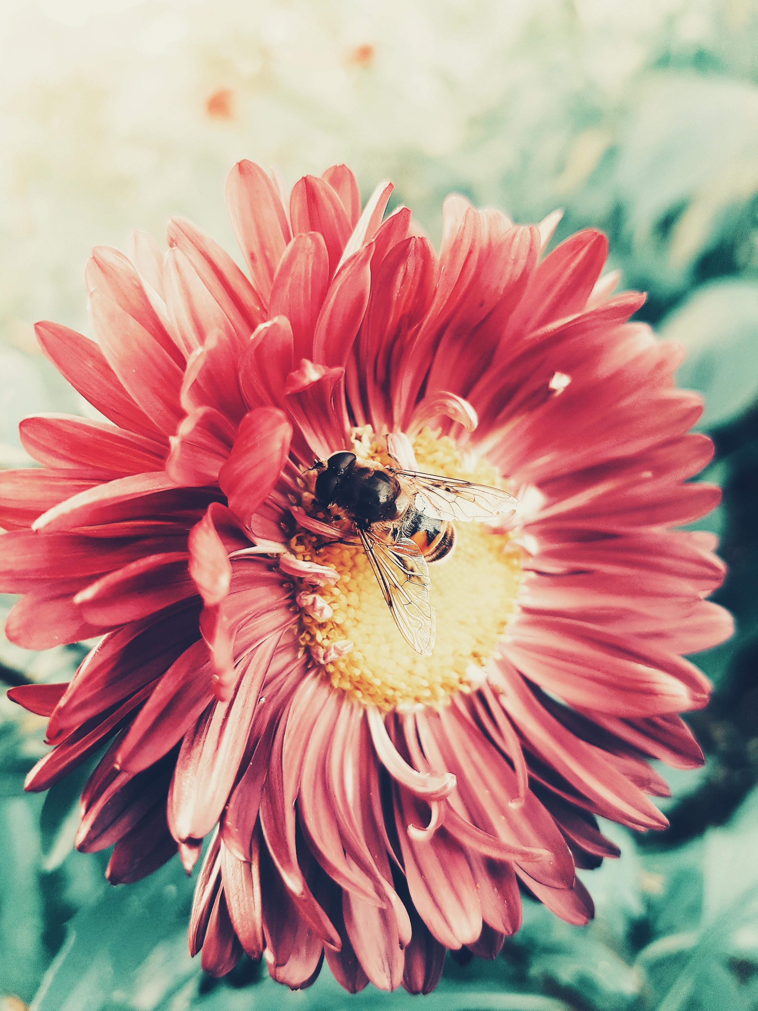 手機的102687屏保和壁紙昆虫。 免費下載 宏, 蜜蜂, 花, 花卉, 授粉, 昆虫, 花瓣 圖片