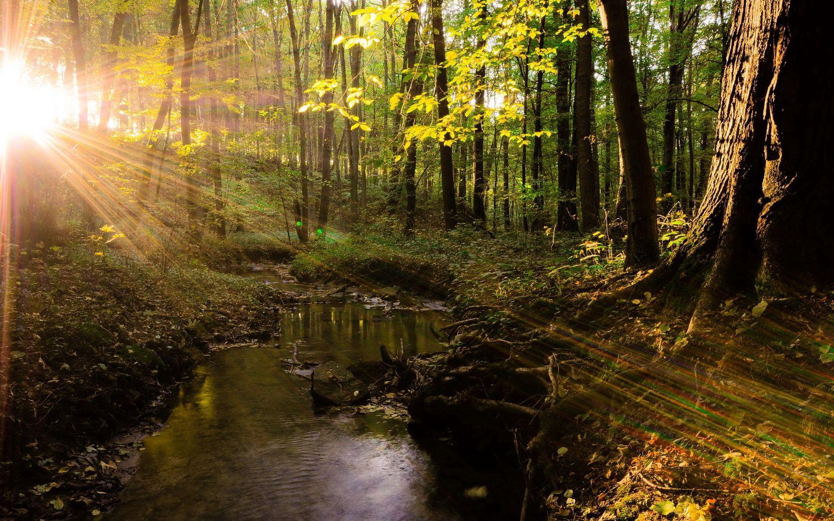 131544壁紙のダウンロード自然, ビーム, 光線, 輝く, 光, 木, 森林, 森, オーバーフロー, サン-スクリーンセーバーと写真を無料で