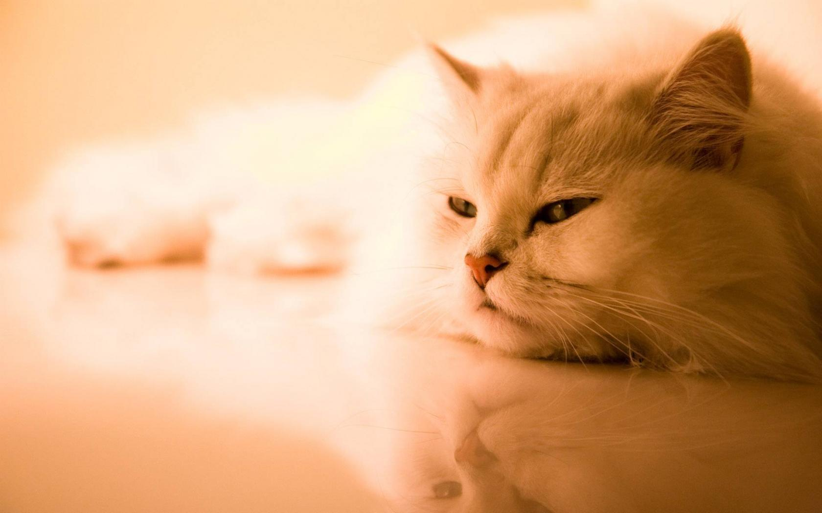 Download mobile wallpaper Animals, Cats for free.