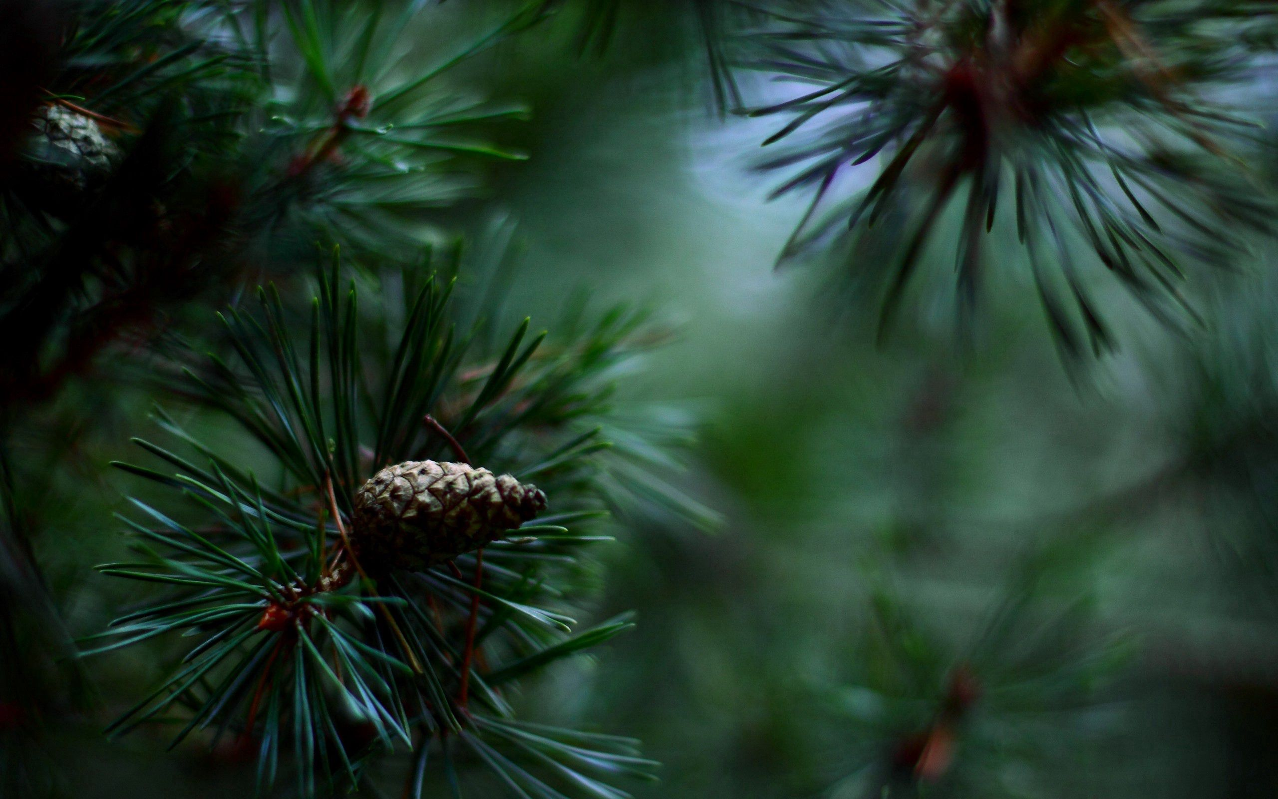148371 Screensavers and Wallpapers Spruce for phone. Download Macro, Blur, Smooth, Branch, Spruce, Fir pictures for free