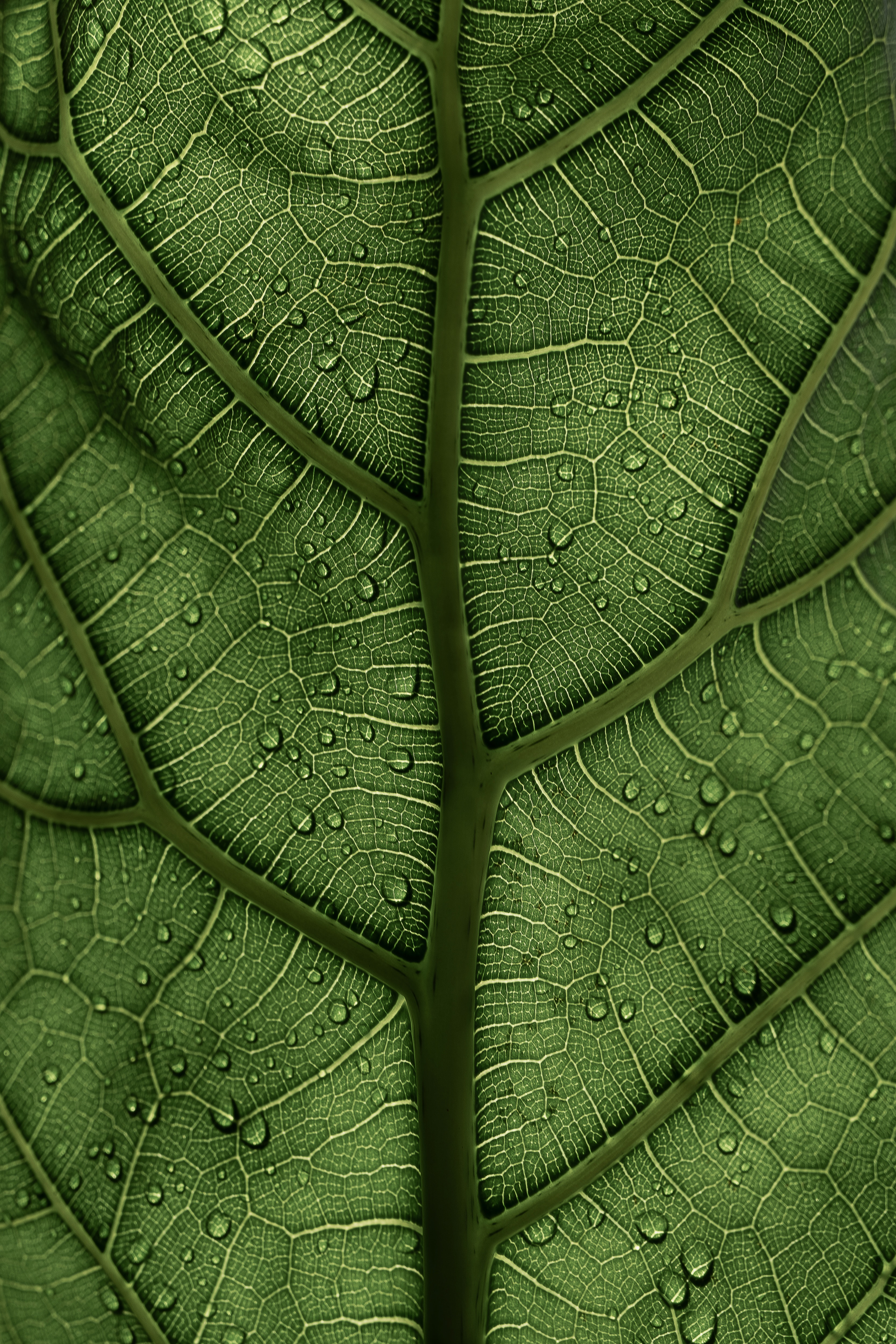 153128 Screensavers and Wallpapers Drops for phone. Download Drops, Macro, Leaflet, Veins pictures for free