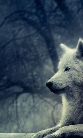 41187 baixar papel de parede Animais, Cães - protetores de tela e imagens gratuitamente