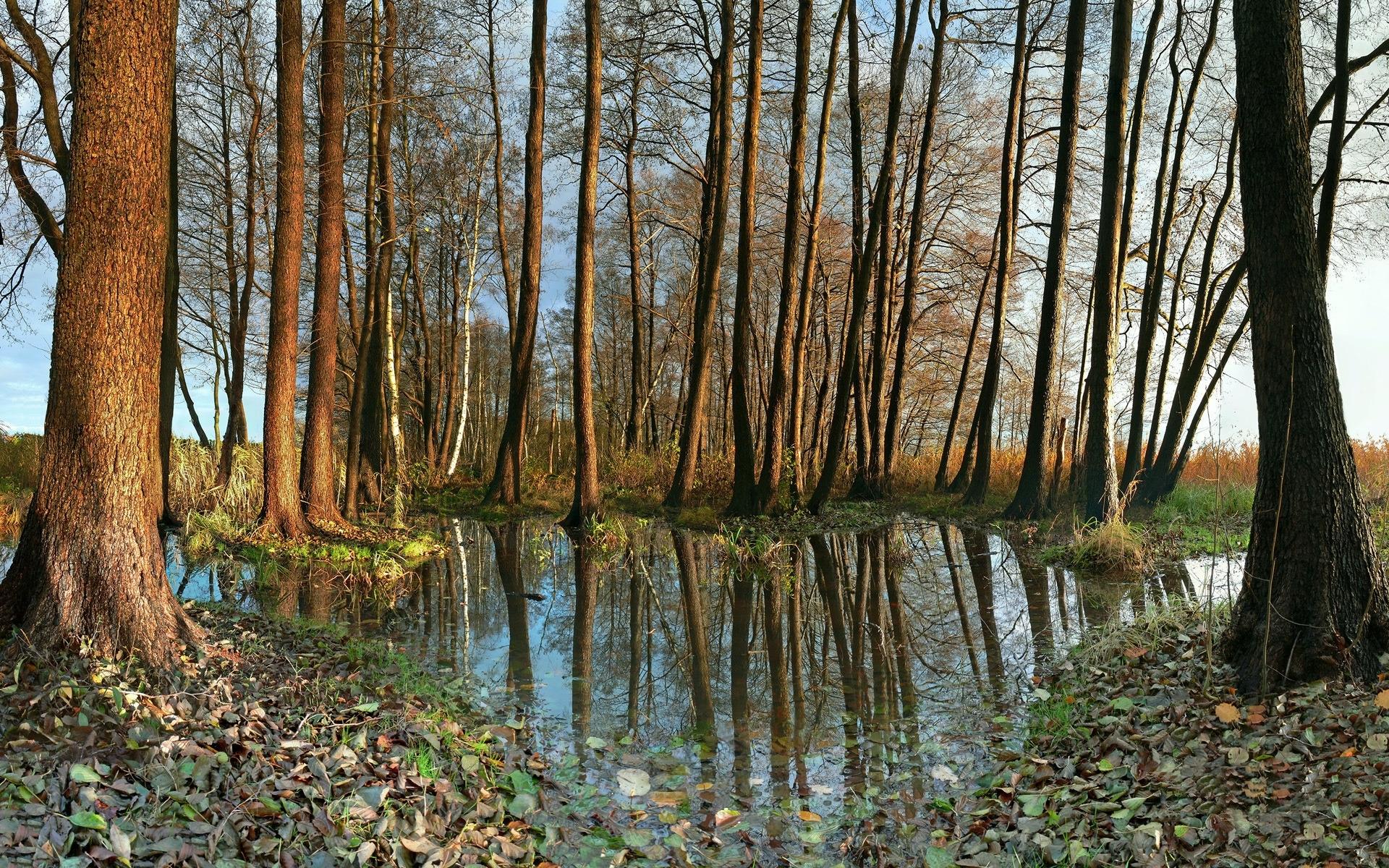 23448 скачать обои Пейзаж, Река, Деревья - заставки и картинки бесплатно