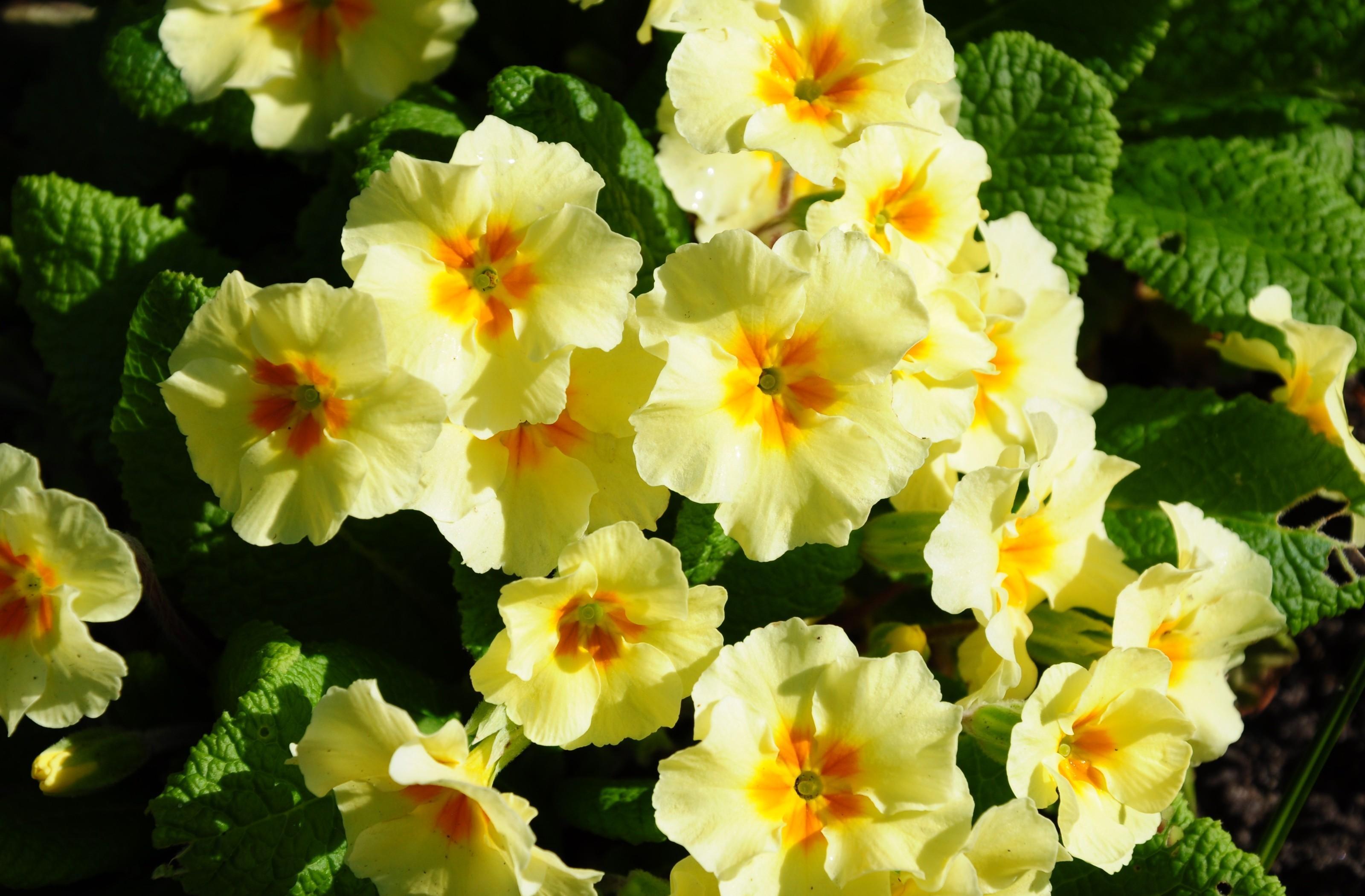 137124 Salvapantallas y fondos de pantalla Flores en tu teléfono. Descarga imágenes de Flores, Primavera, Verduras, Cama De Flores, Parterre, Soleado gratis