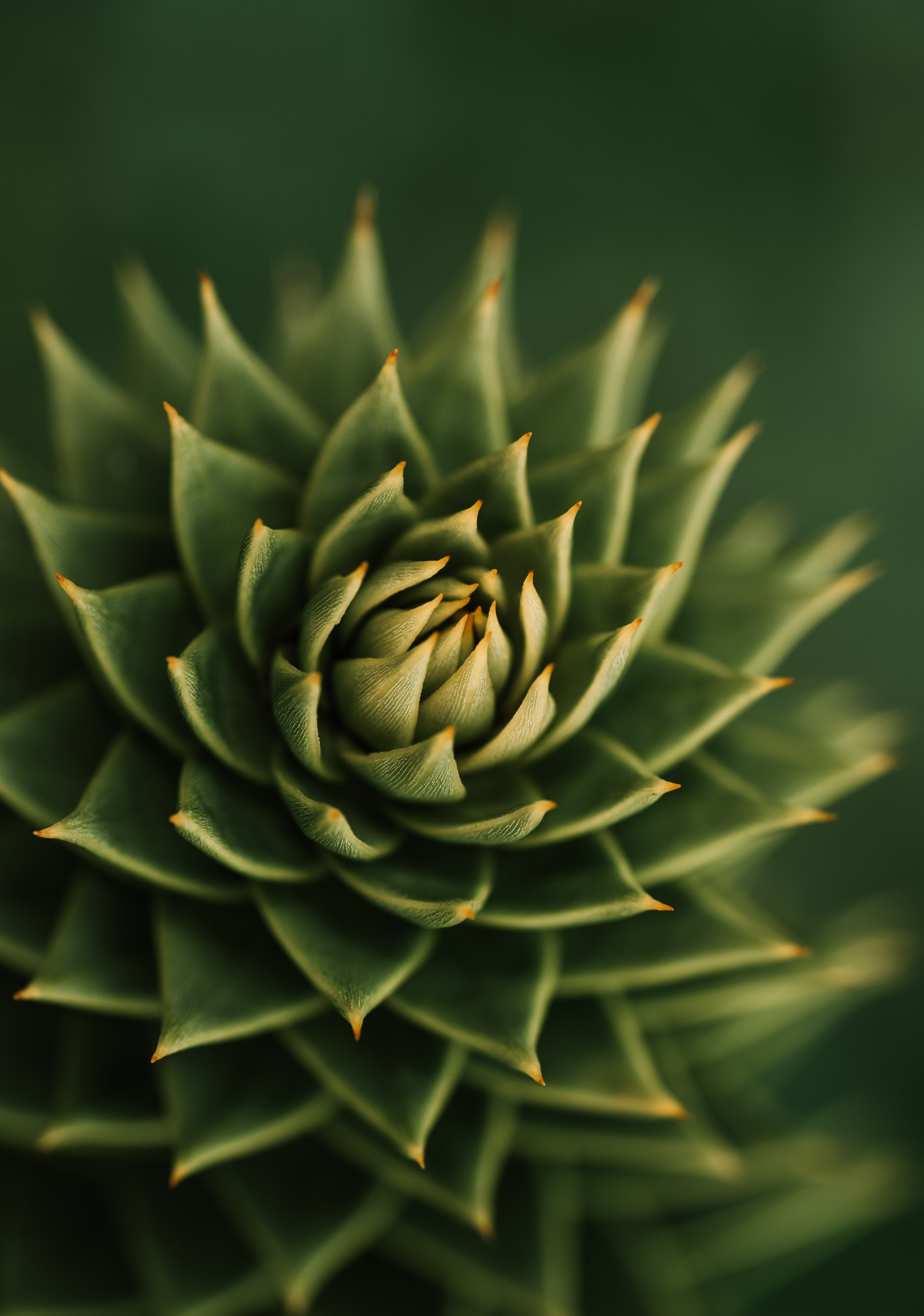 132279 download wallpaper Plant, Macro, Barbed, Spiny, Succulent screensavers and pictures for free