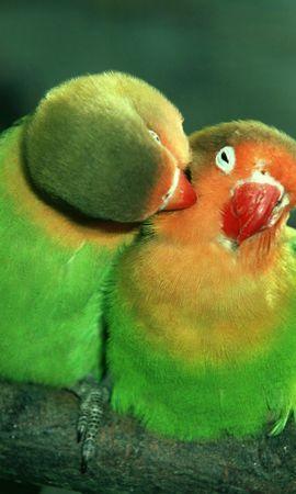 35895 baixar papel de parede Animais, Aves, Papagaios - protetores de tela e imagens gratuitamente