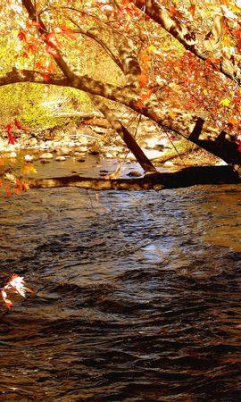 6111 скачать обои Пейзаж, Река, Листья - заставки и картинки бесплатно
