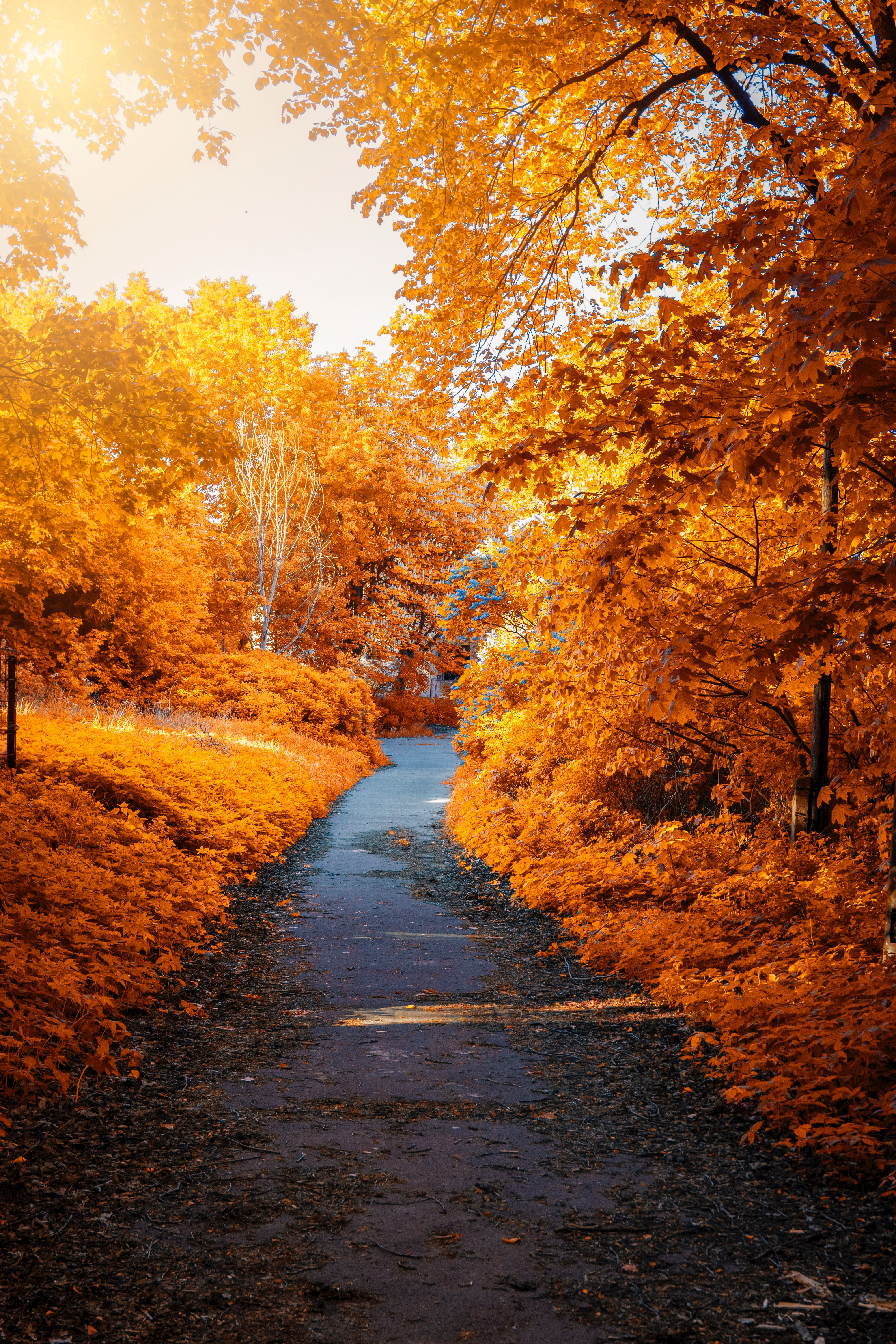 99893 download wallpaper Nature, Autumn, Path, Park, Foliage screensavers and pictures for free