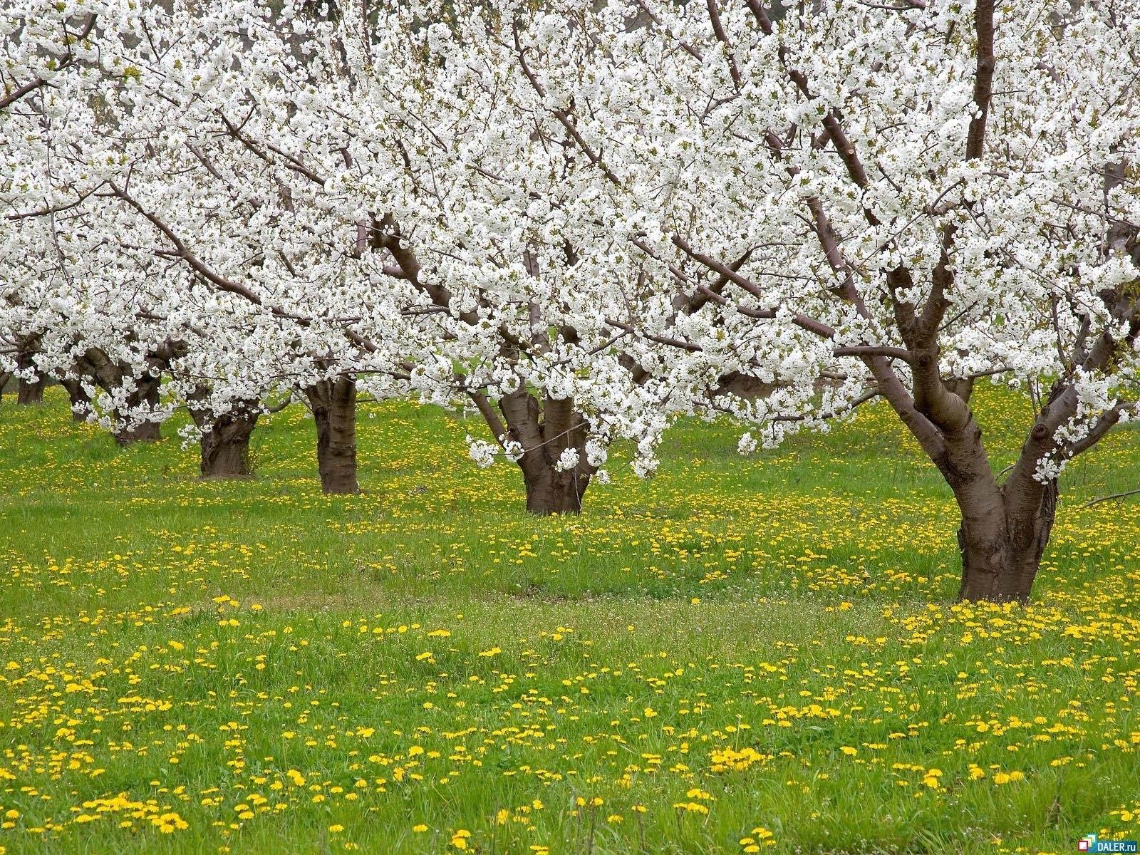 10095 descargar fondo de pantalla Paisaje, Flores, Árboles: protectores de pantalla e imágenes gratis