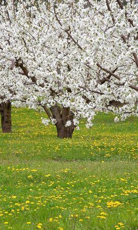 10095 скачать обои Пейзаж, Цветы, Деревья - заставки и картинки бесплатно