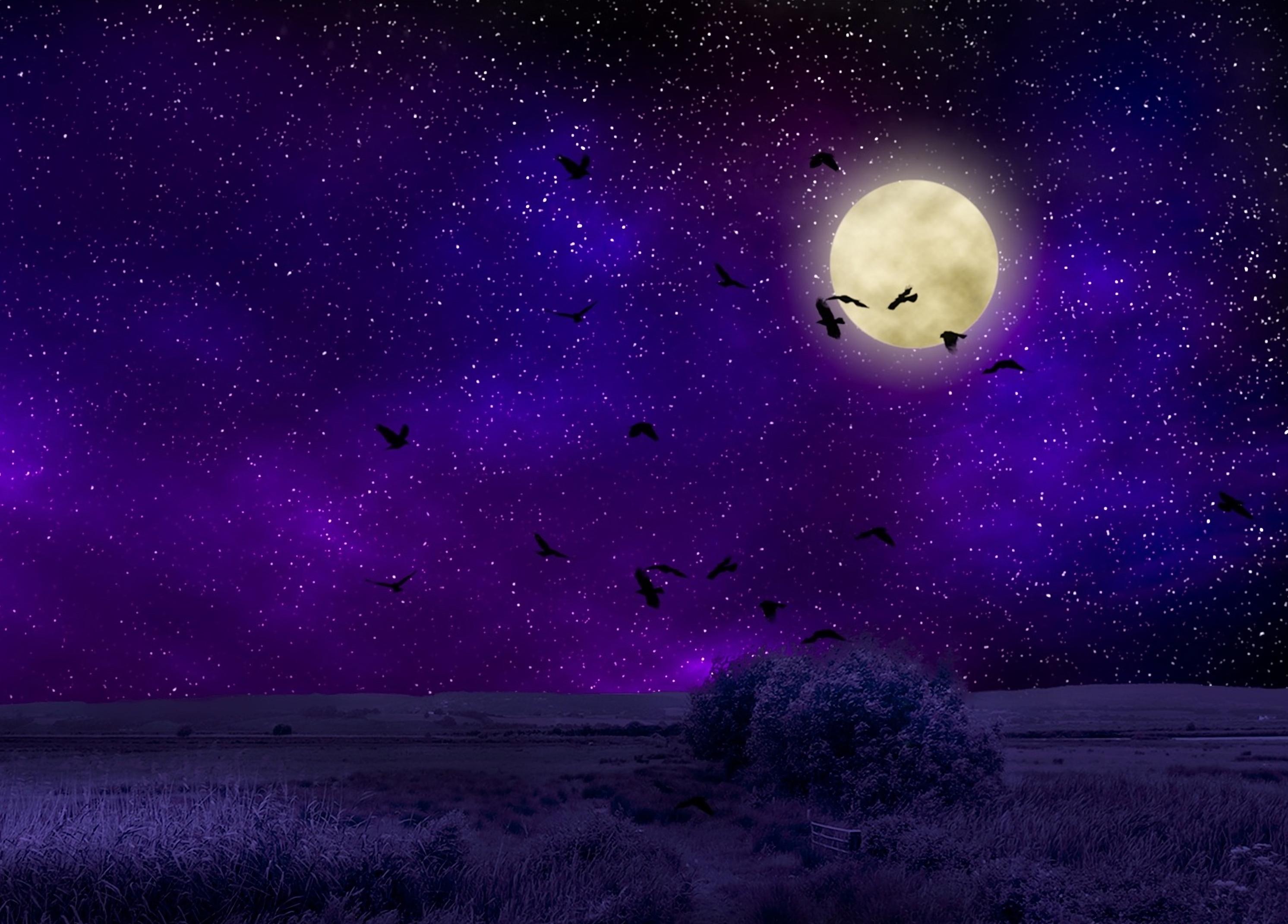 122793 Protetores de tela e papéis de parede Lua em seu telefone. Baixe Escuro, Lua, Aves, Noite, Céu Estrelado, Photoshop, Luar fotos gratuitamente