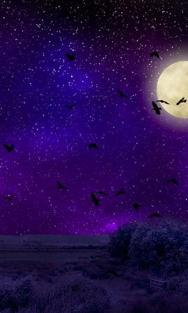 122793 baixar papel de parede Escuro, Lua, Luar, Céu Estrelado, Noite, Photoshop, Aves - protetores de tela e imagens gratuitamente