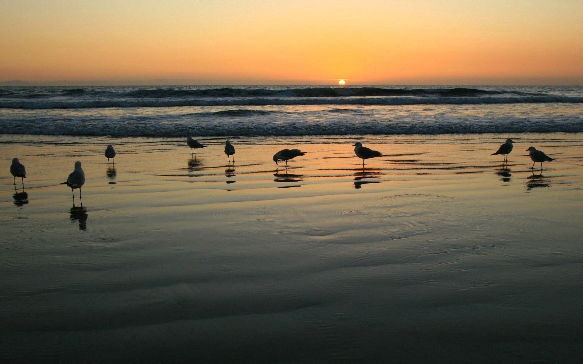 148196 download wallpaper Animals, Sea, Sunset, Shine, Light, Seagulls screensavers and pictures for free