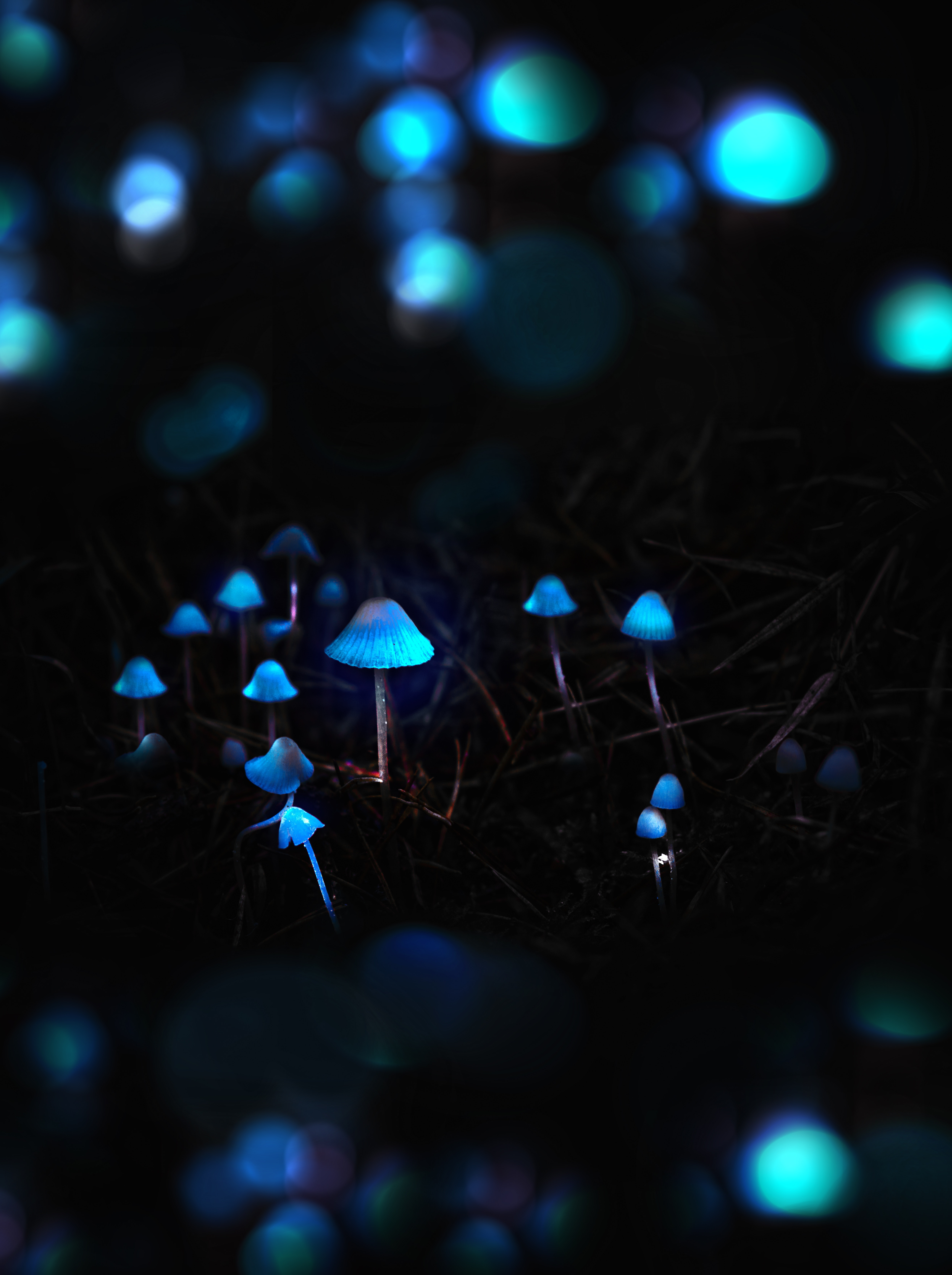 72675 download wallpaper Mashrooms, Dark, Glow, Photoshop, Toadstools, Grebe screensavers and pictures for free
