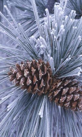 26566 скачать обои Растения, Зима, Деревья, Шишки, Сосны - заставки и картинки бесплатно