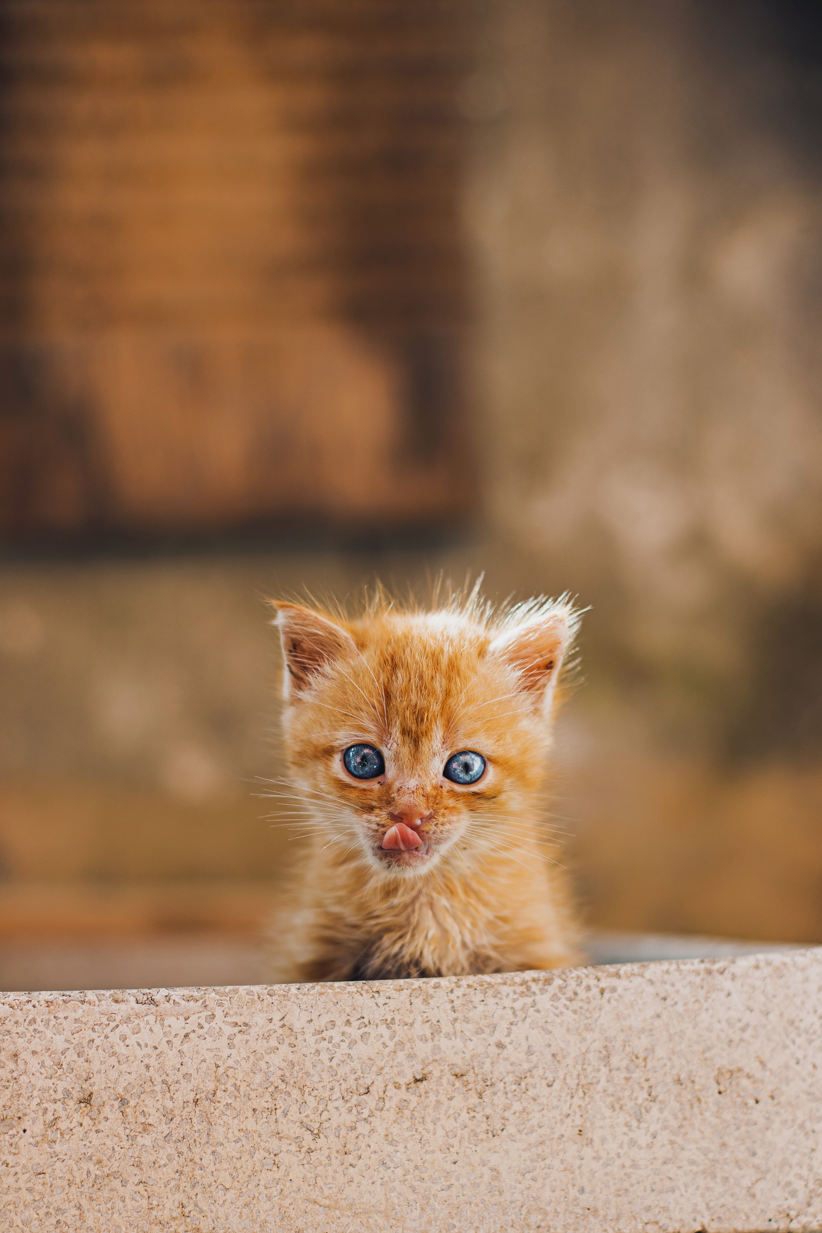 99907 download wallpaper Animals, Kitty, Kitten, Protruding Tongue, Tongue Stuck Out, Redhead, Nice, Sweetheart screensavers and pictures for free