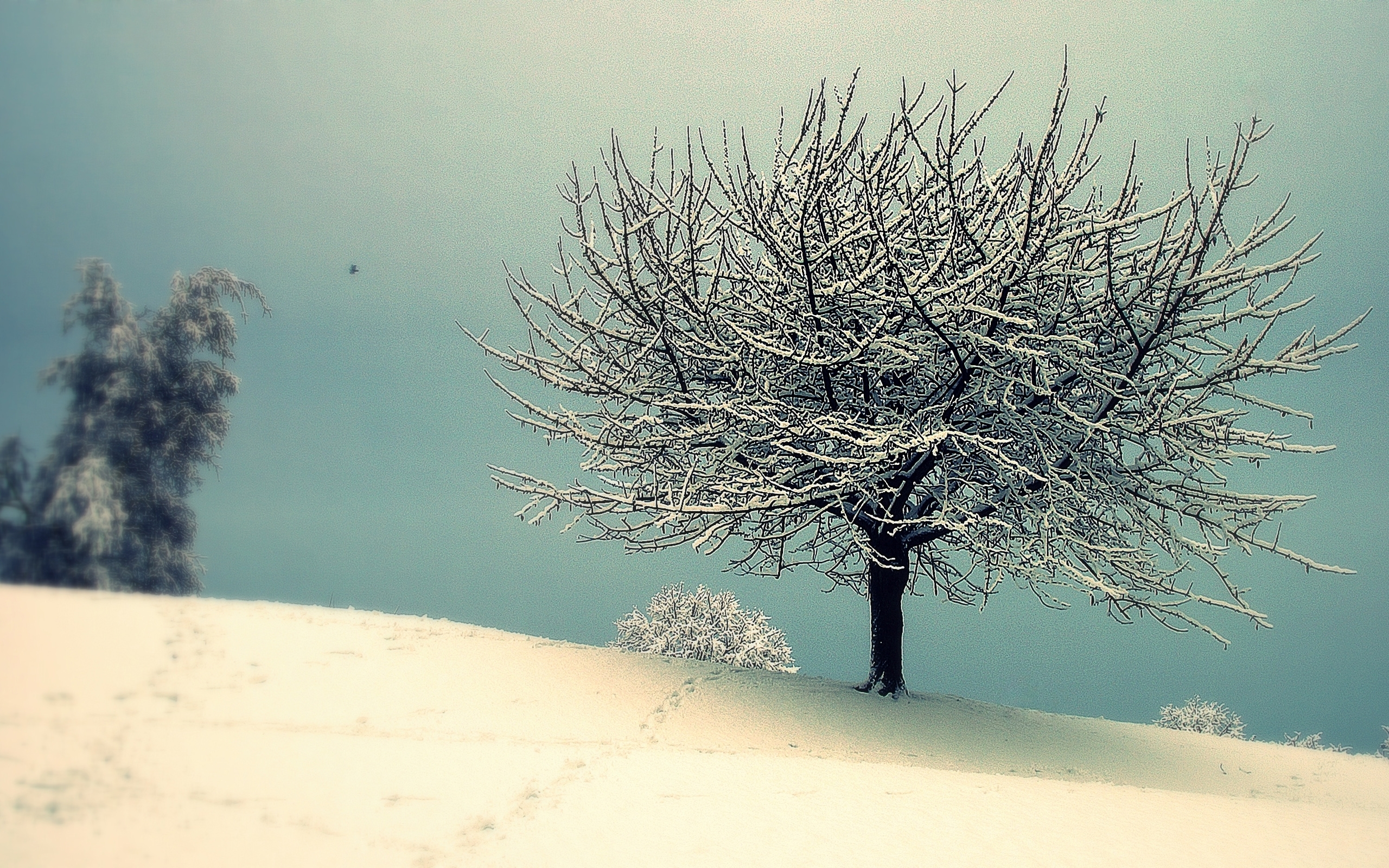 42614 download wallpaper Landscape, Winter screensavers and pictures for free