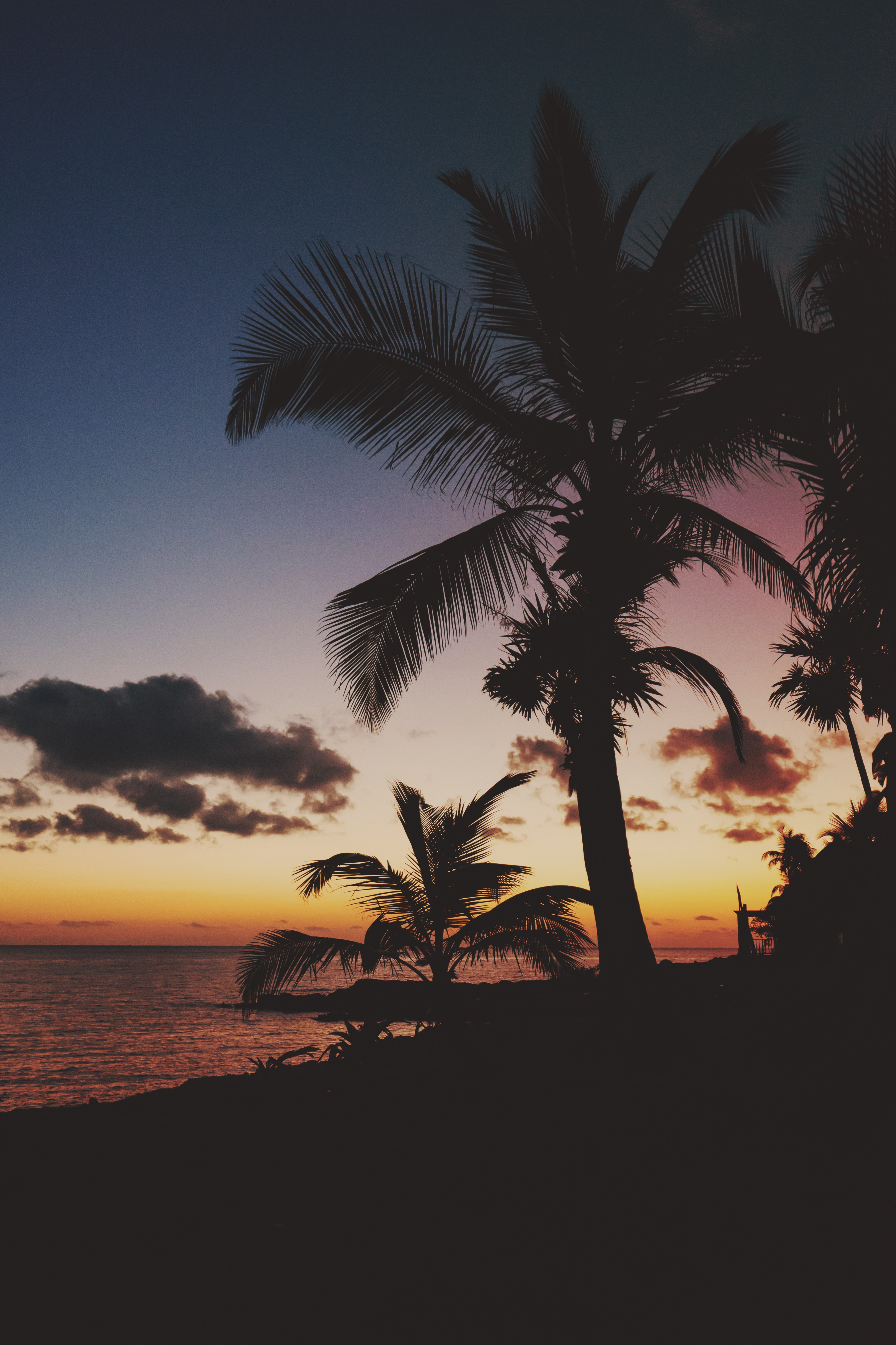 92135 download wallpaper Nature, Tropics, Sunset, Branches, Mexico, Palms screensavers and pictures for free