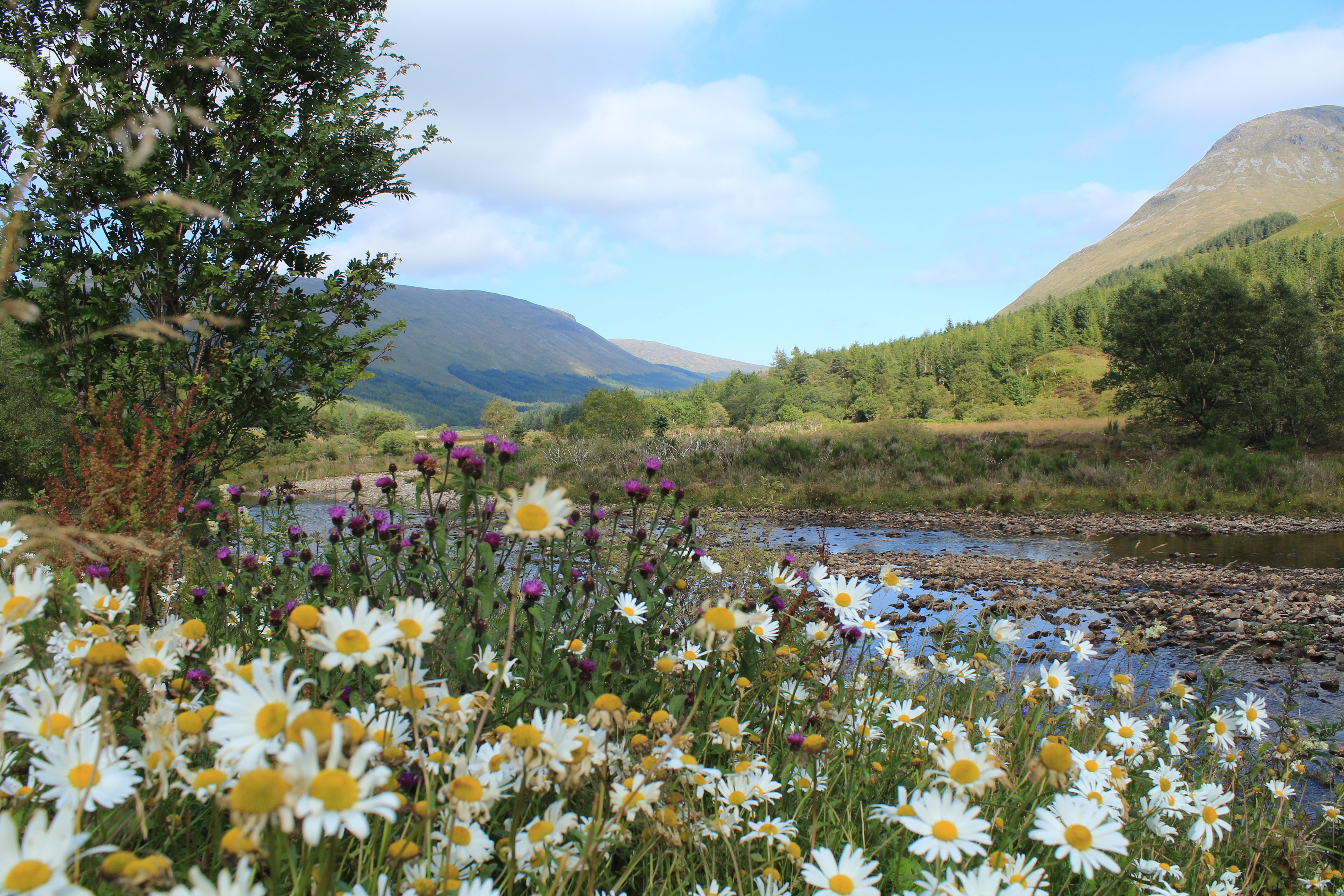 135033 Hintergrundbild herunterladen Natur, Flüsse, Grass, Mountains, Kamille, Schottland - Bildschirmschoner und Bilder kostenlos